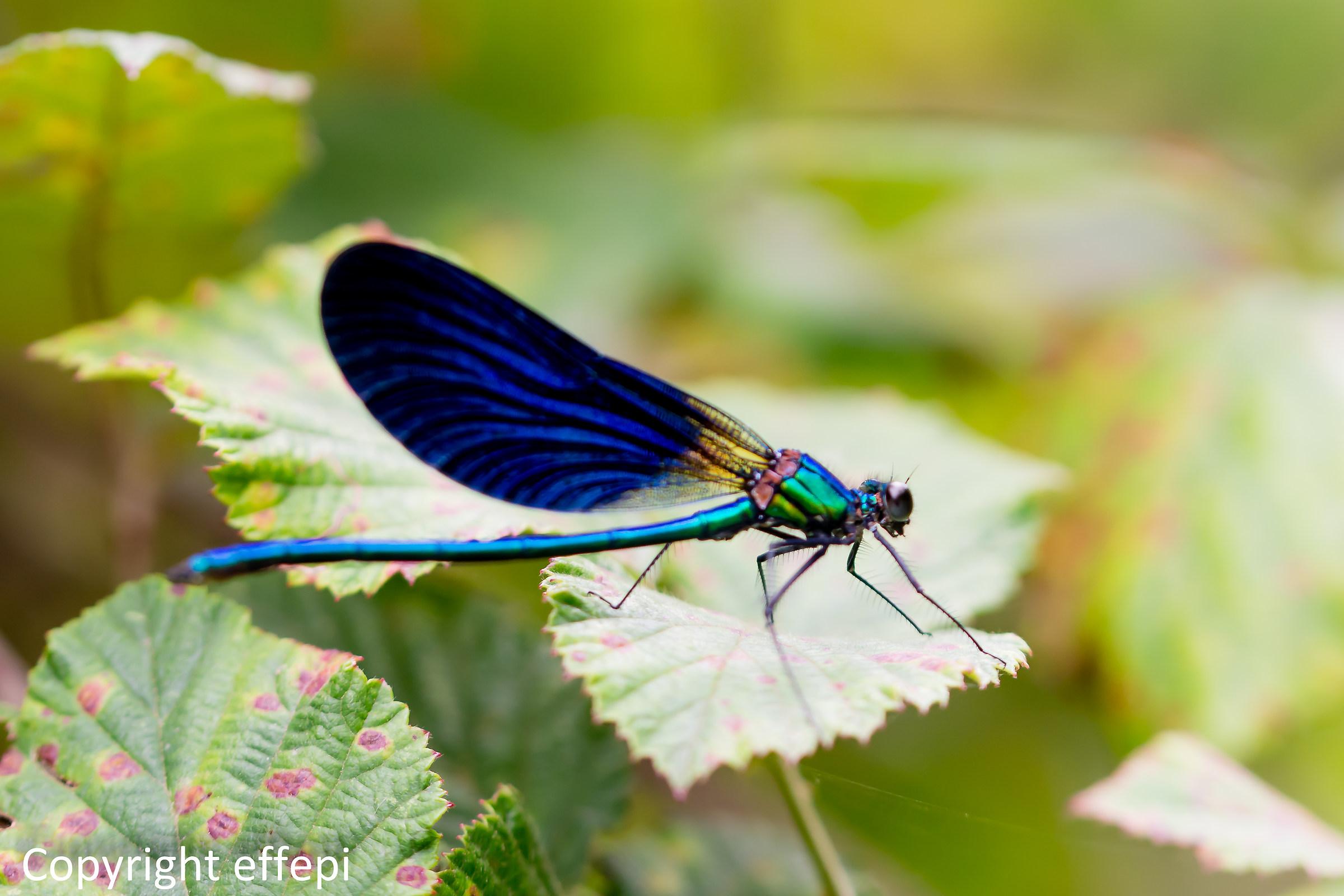 Dragonfly 3...