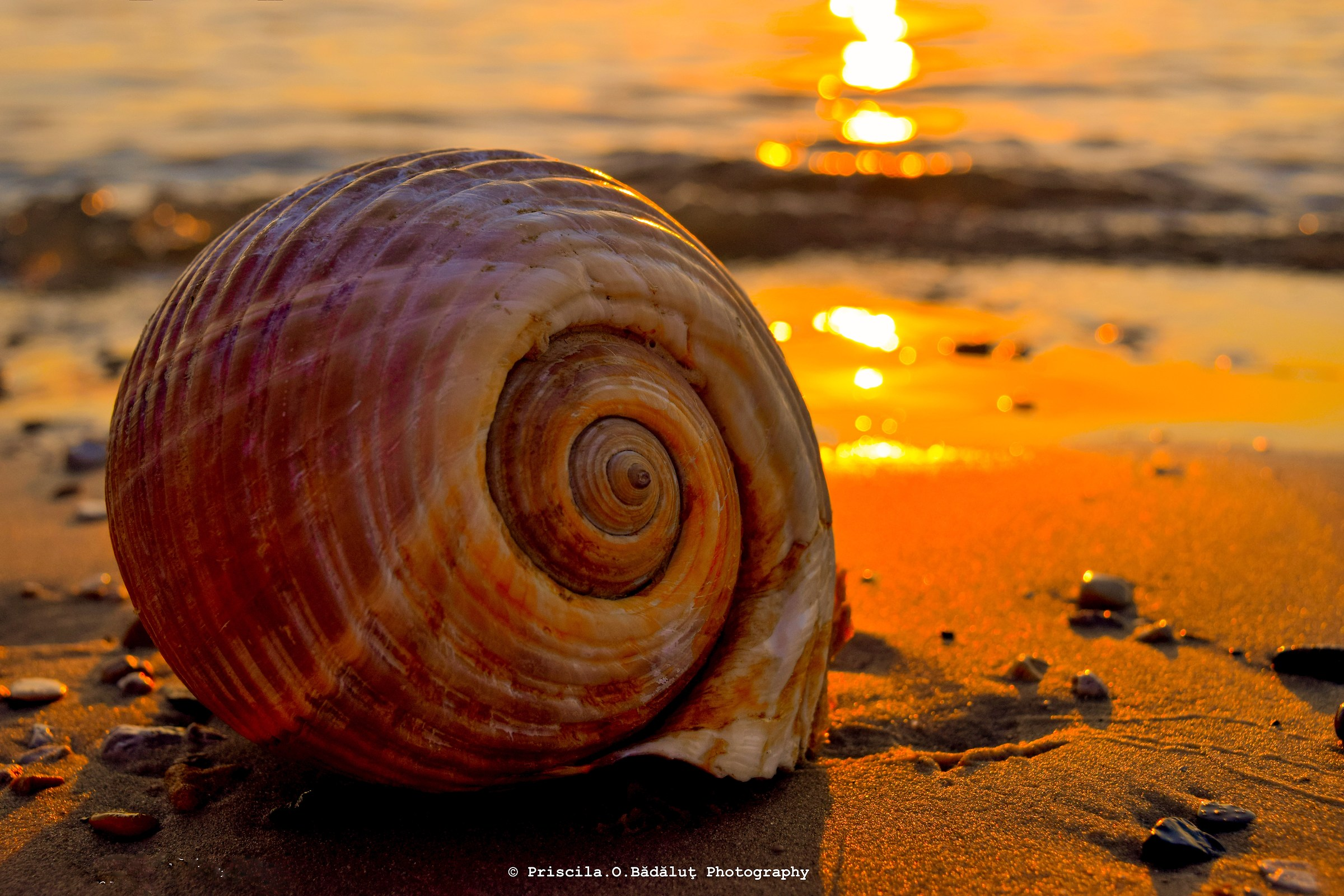 Giant shell...