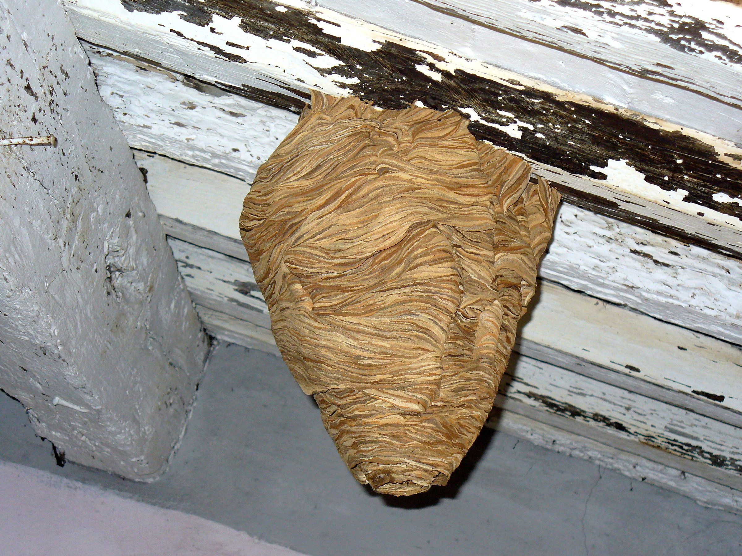 hornet's nest...