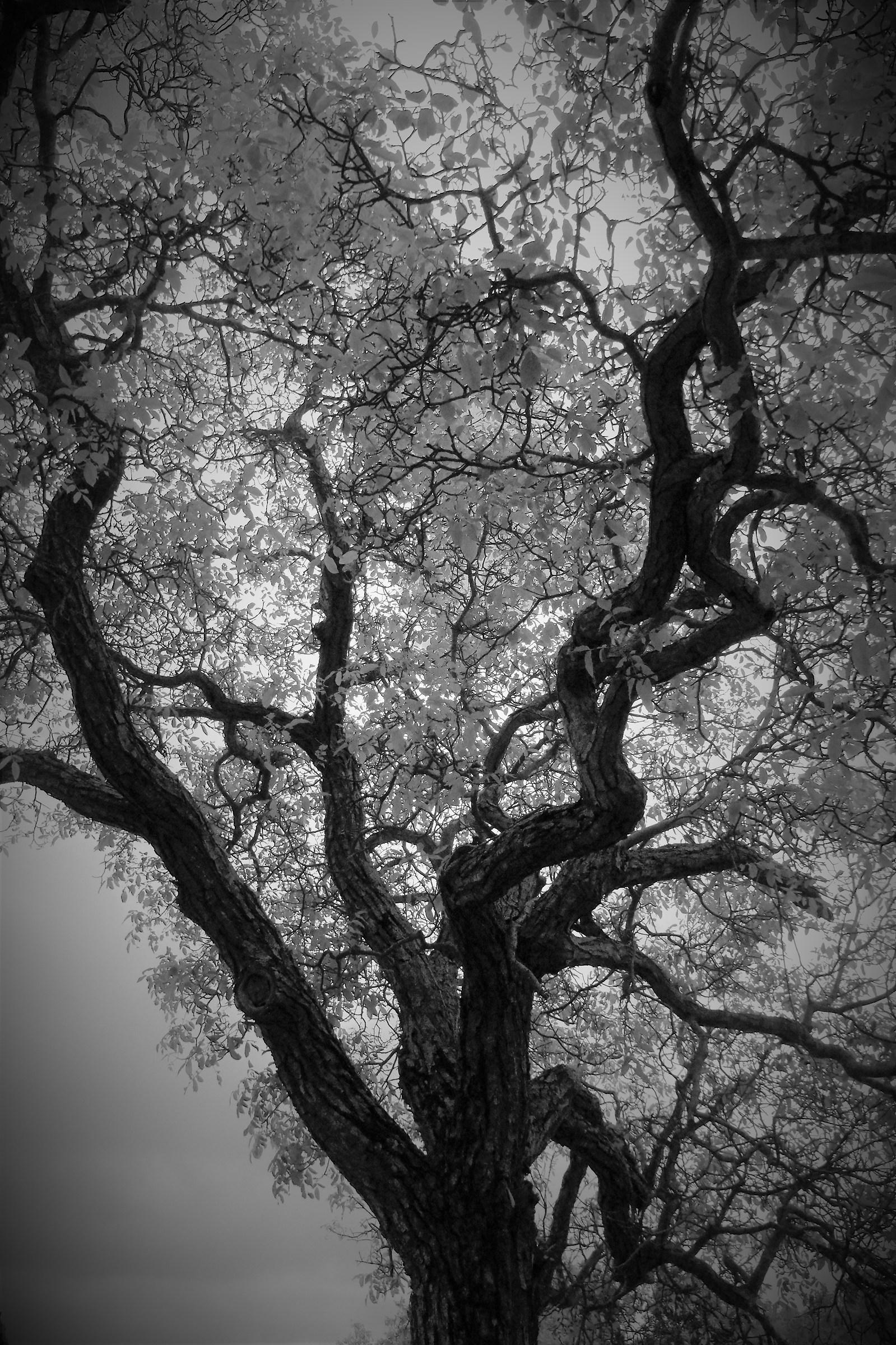 That branch ......