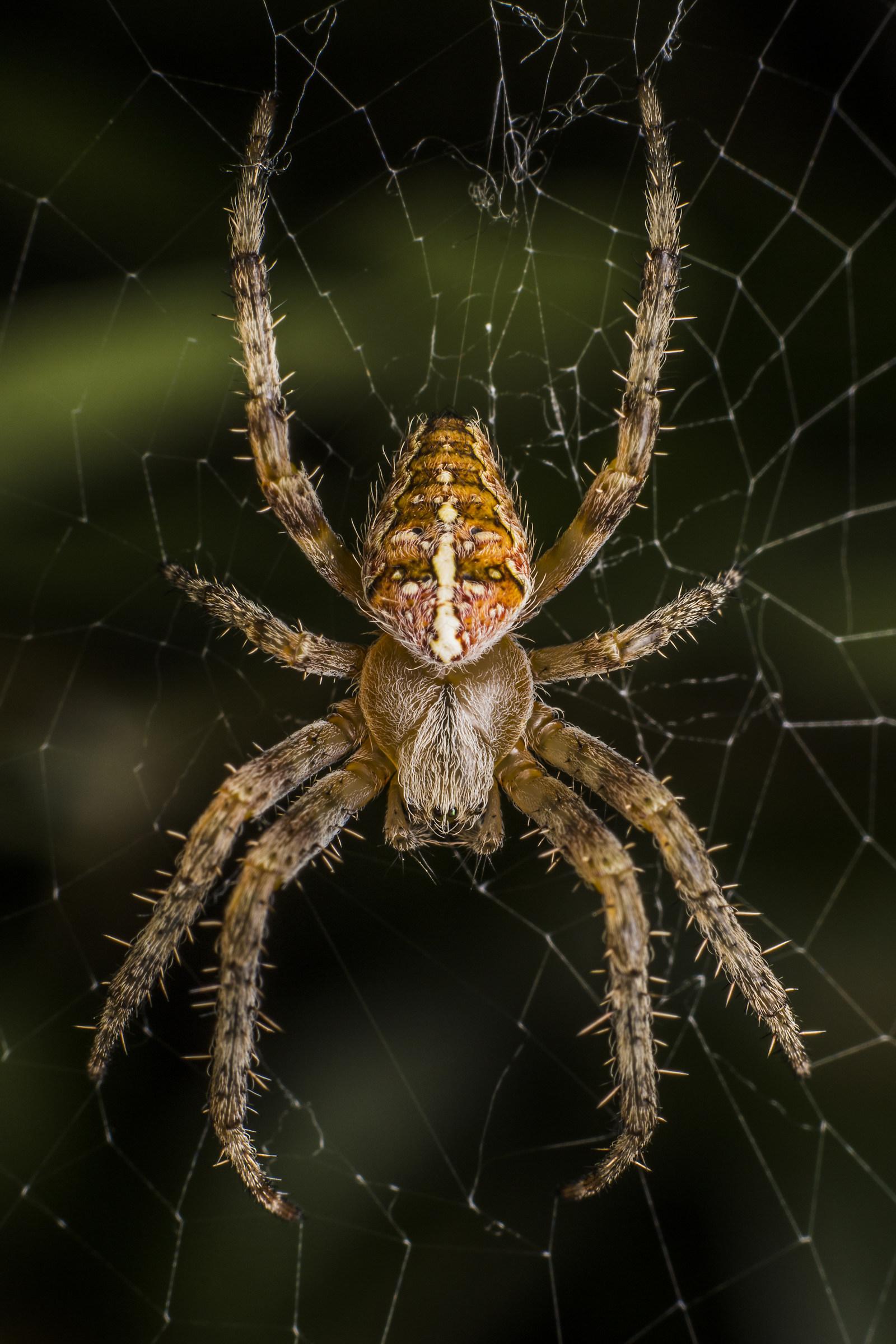Spider on Spider Web...