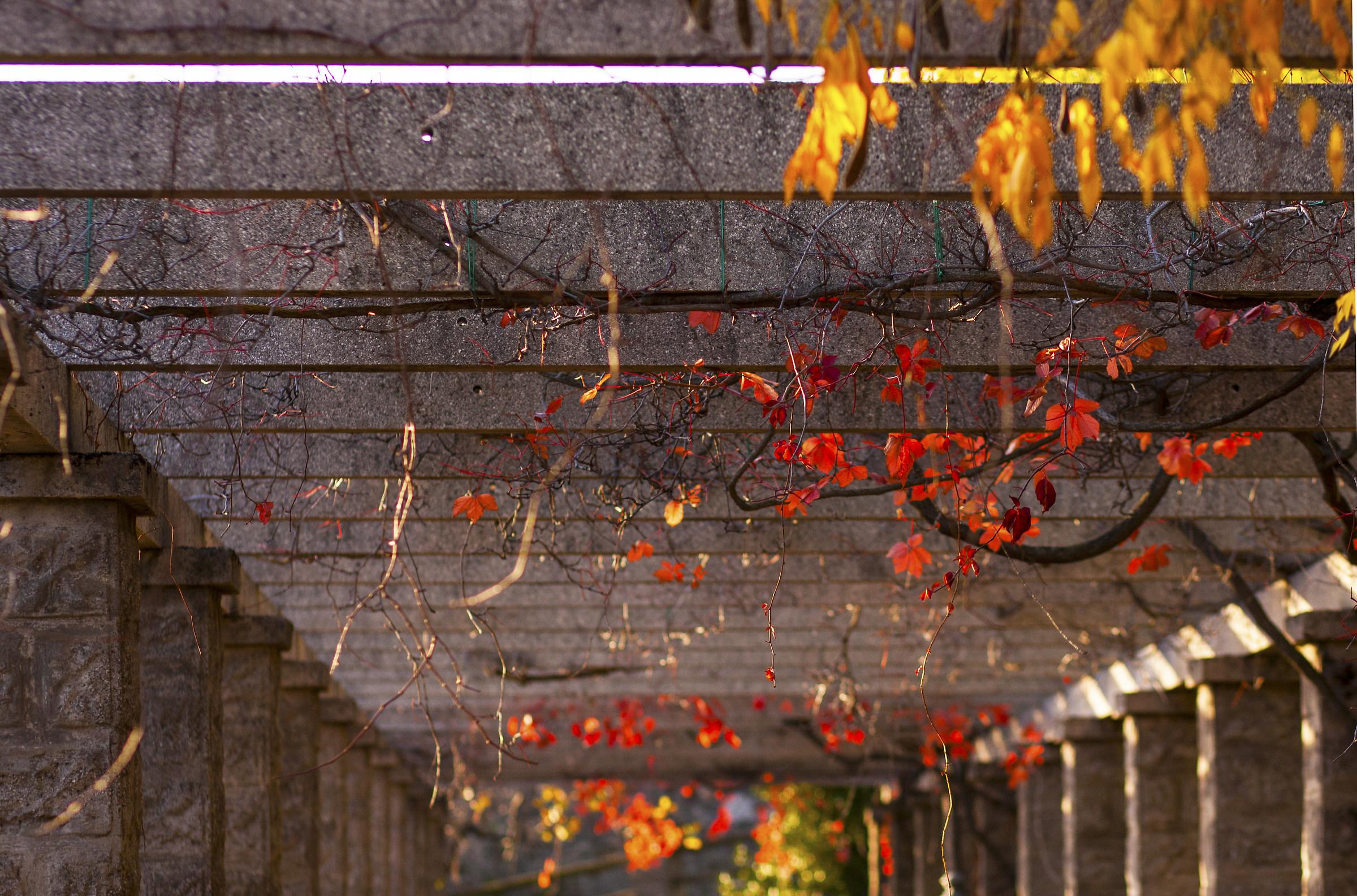 Symmetries autumn...