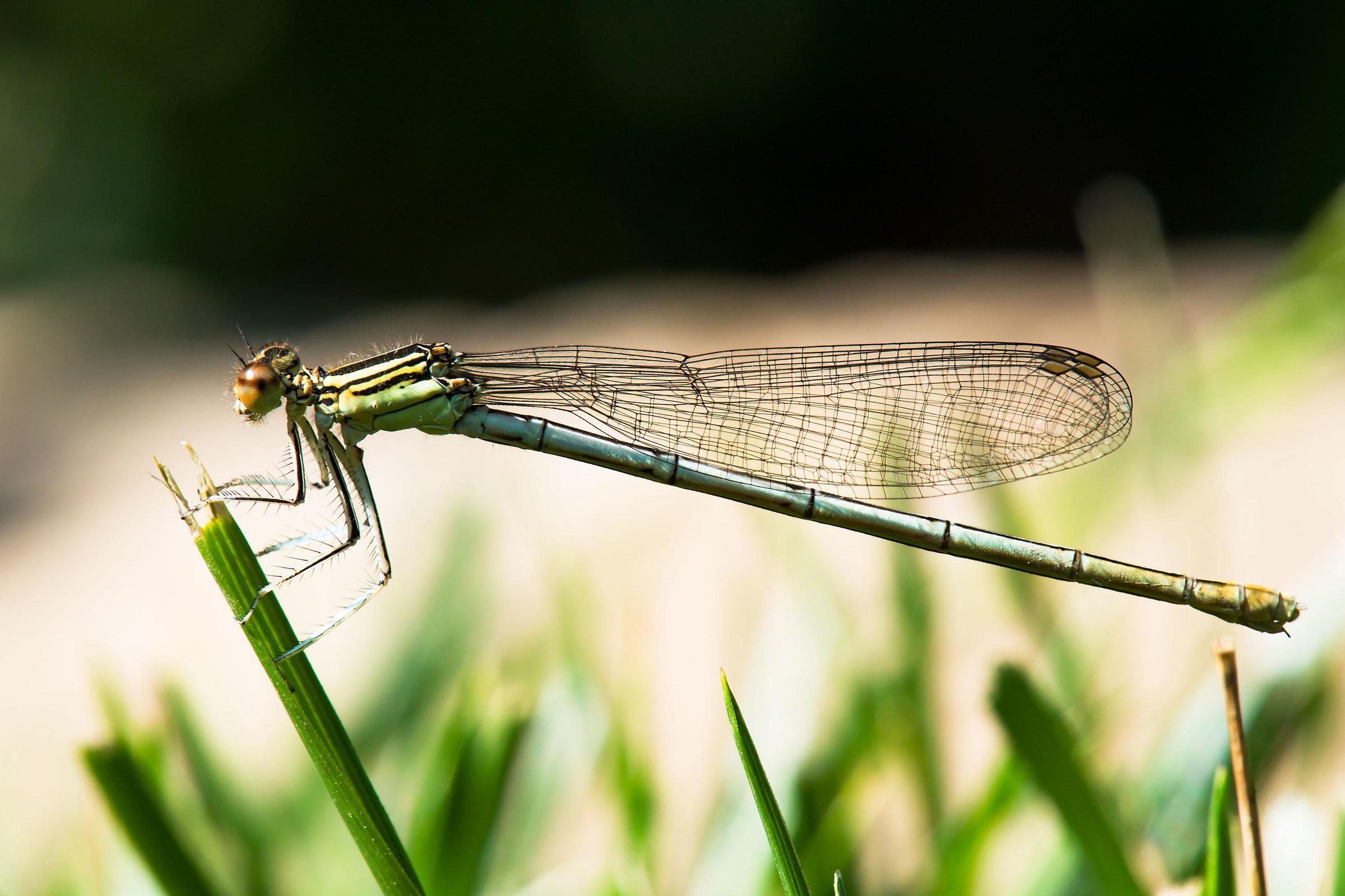 Dragonfly 03...