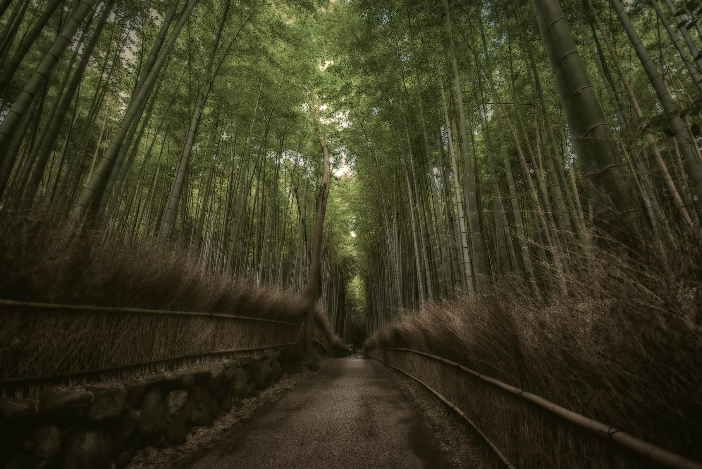 arashiyama...