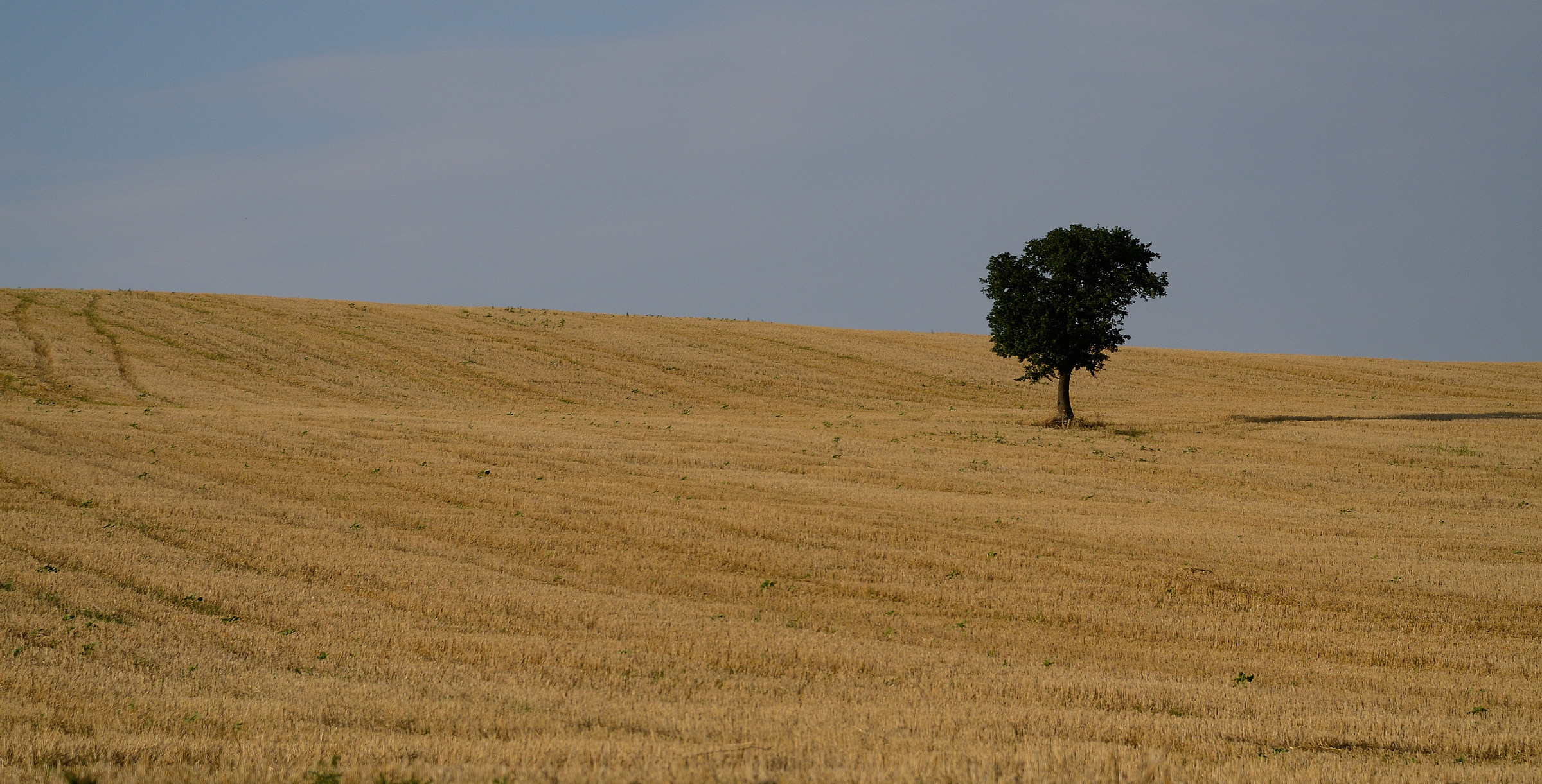 L'albero solitario...