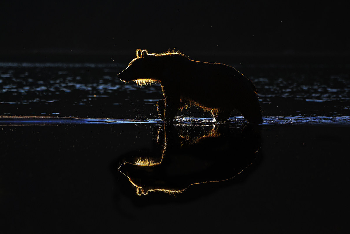 Bear in the mirror...