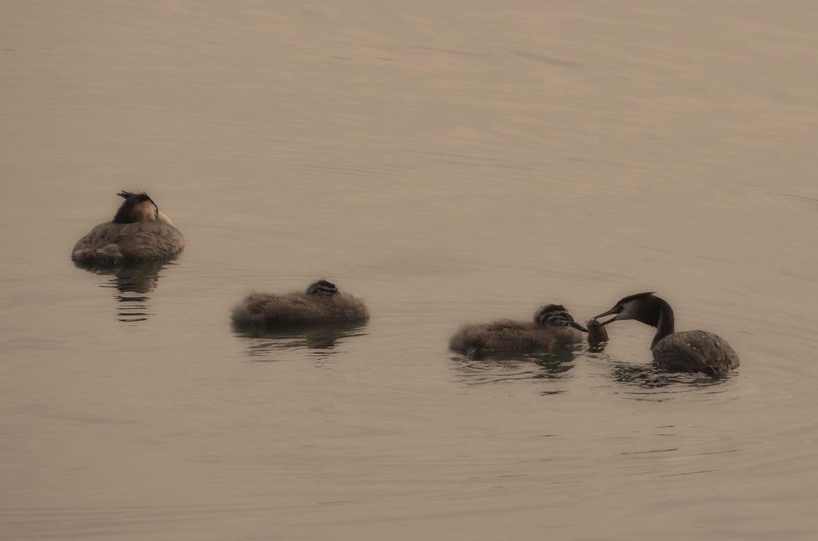 On Lake Iseo...
