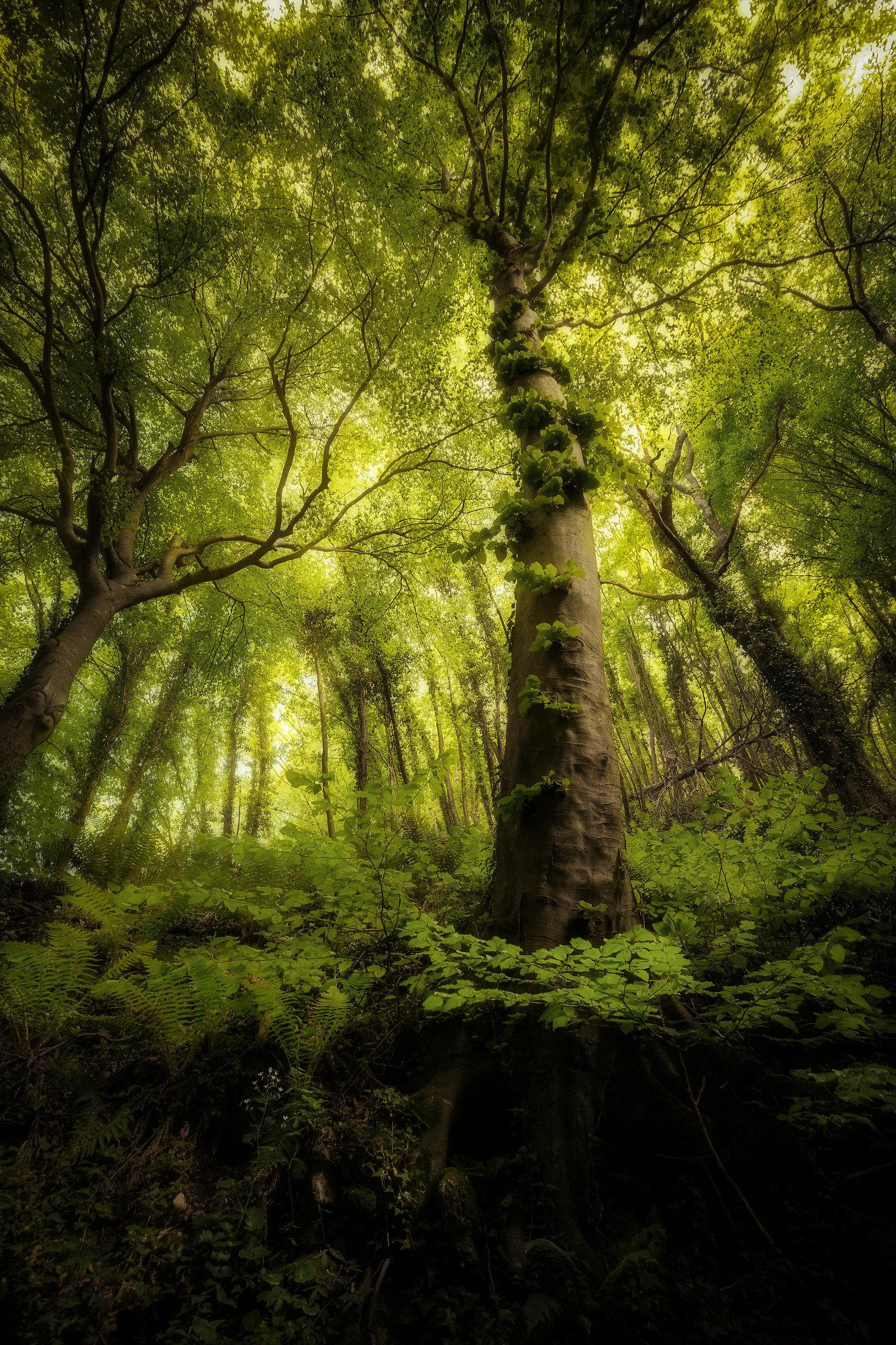 Tree of light...