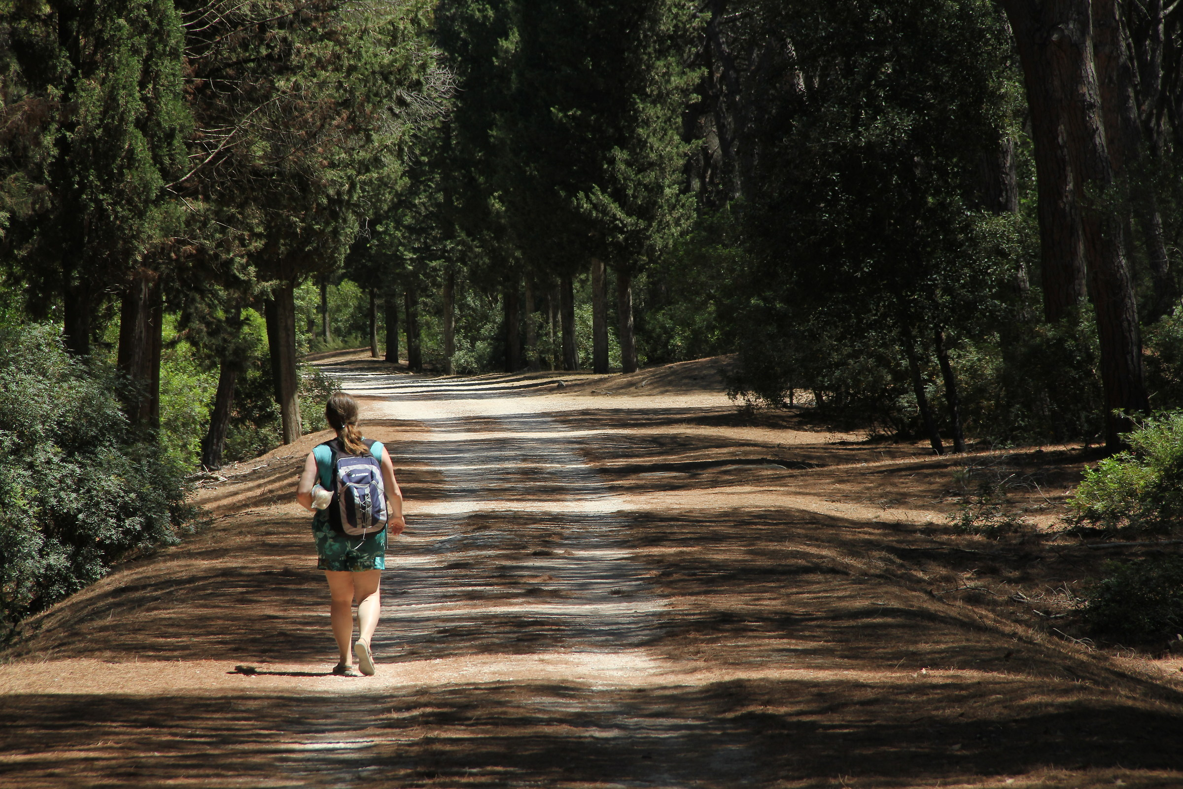 A walk in the pine forest...