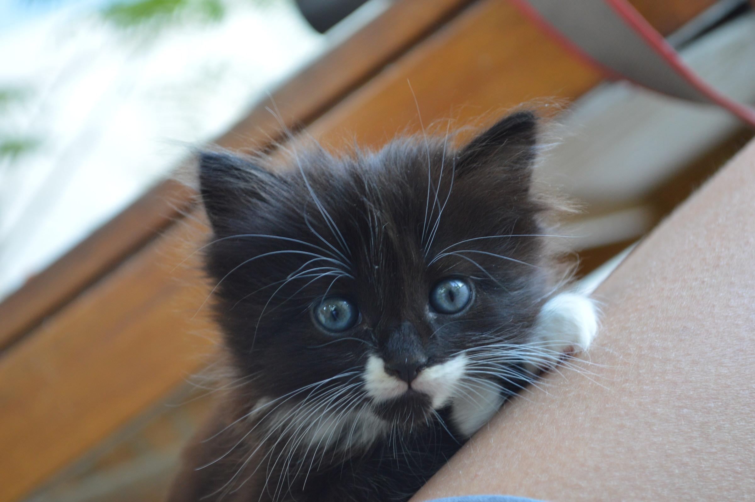 chat .... francais!...