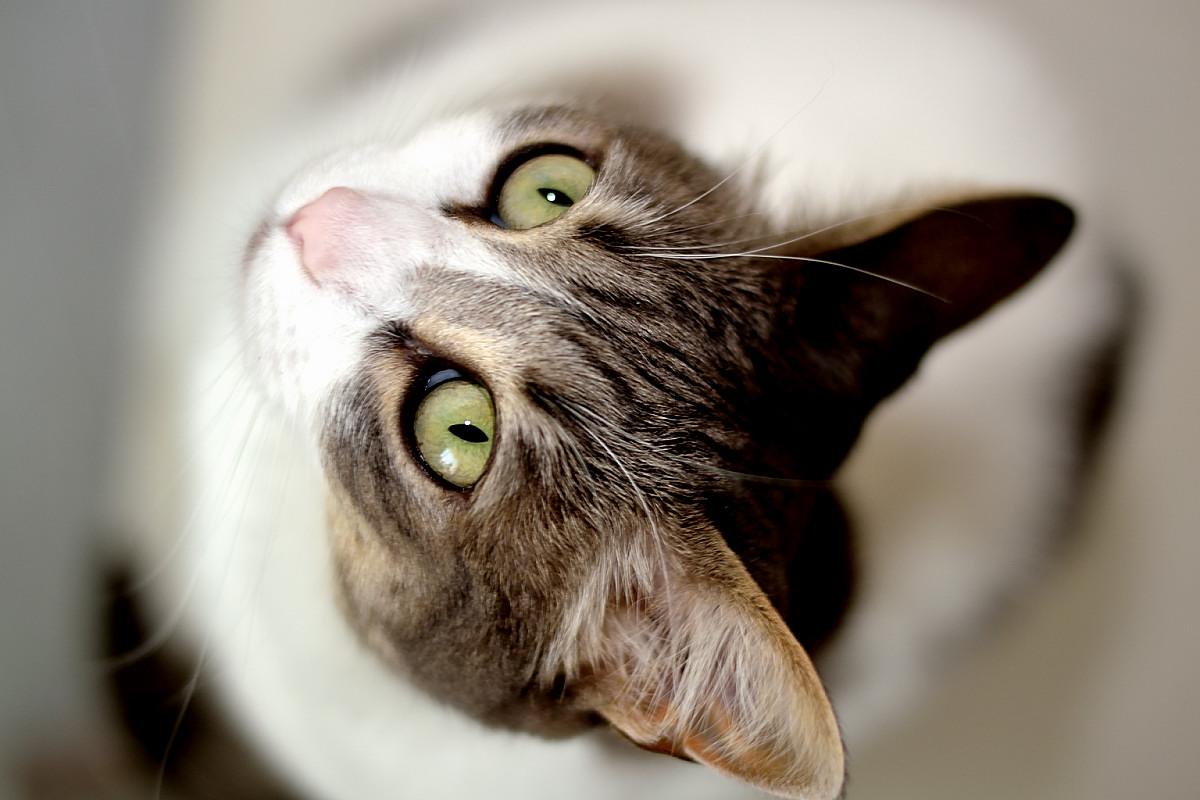Il mio gatto...