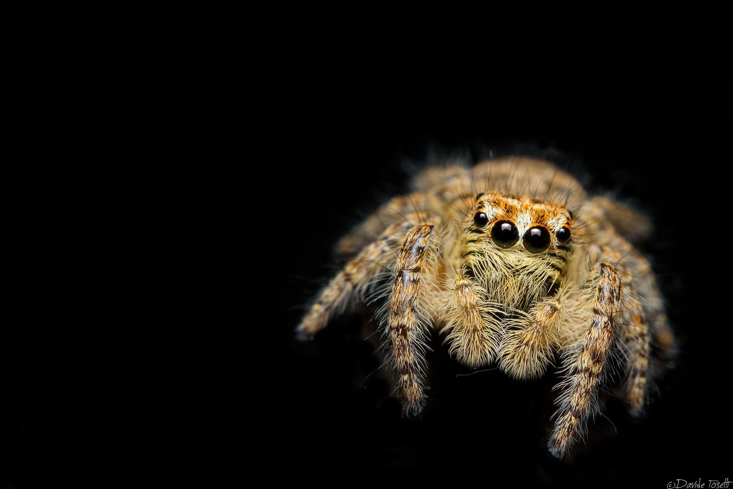 Hopping spider...
