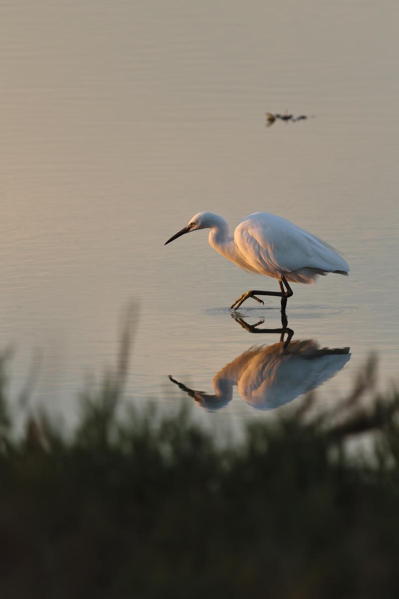 egret stealth...