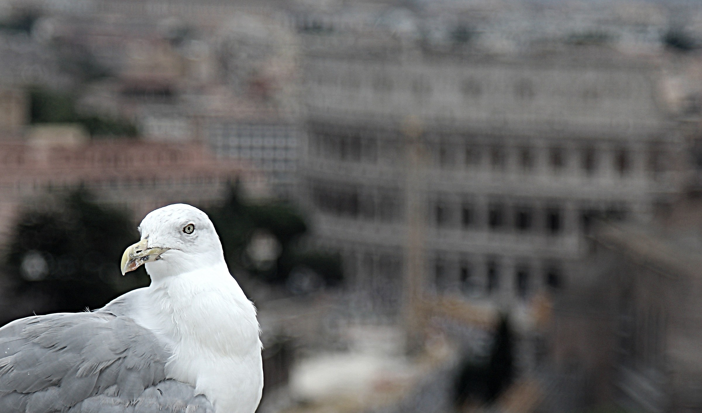 The Warden of the Colosseum...