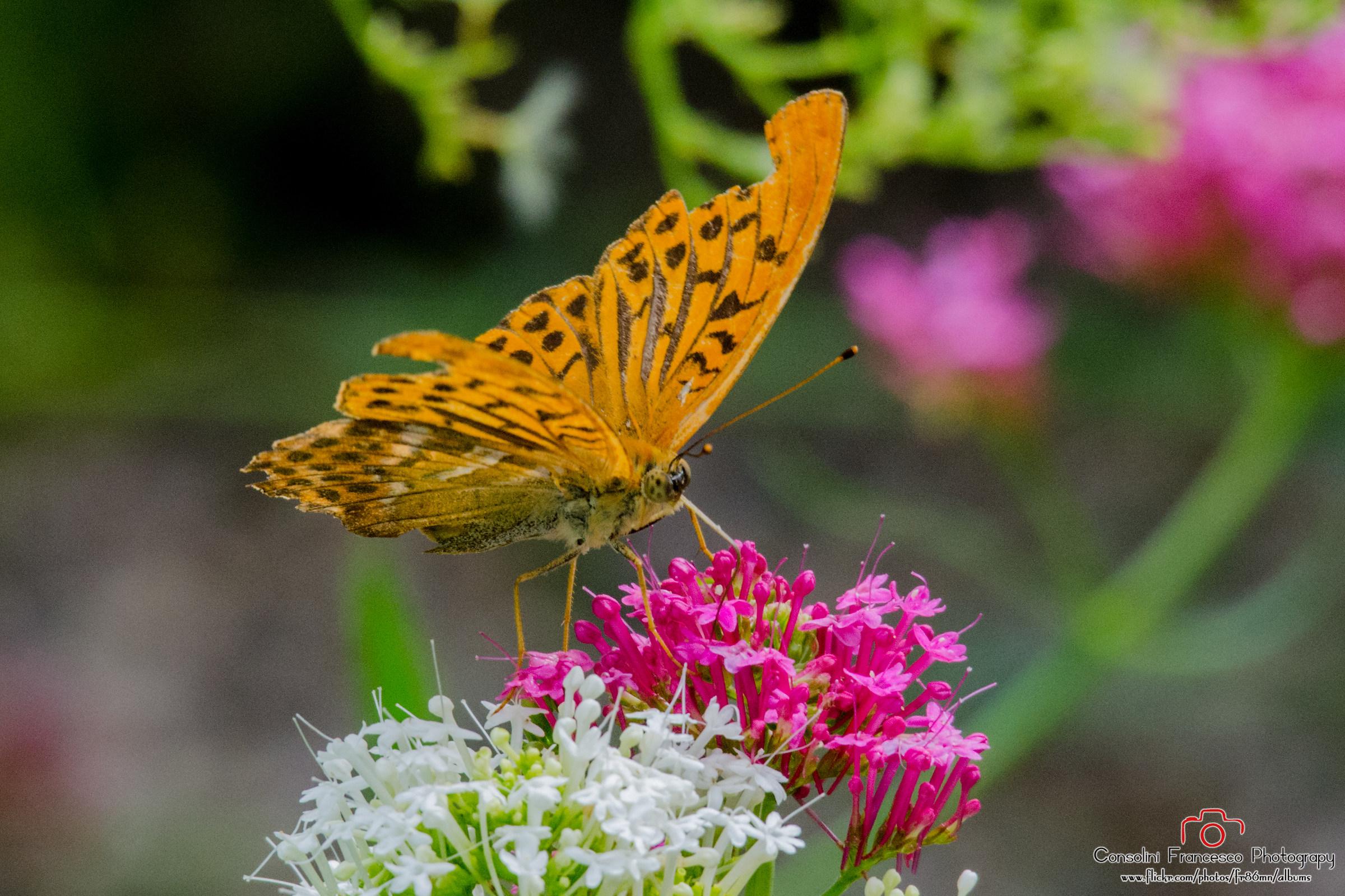 Botanical Gardens Trieste...