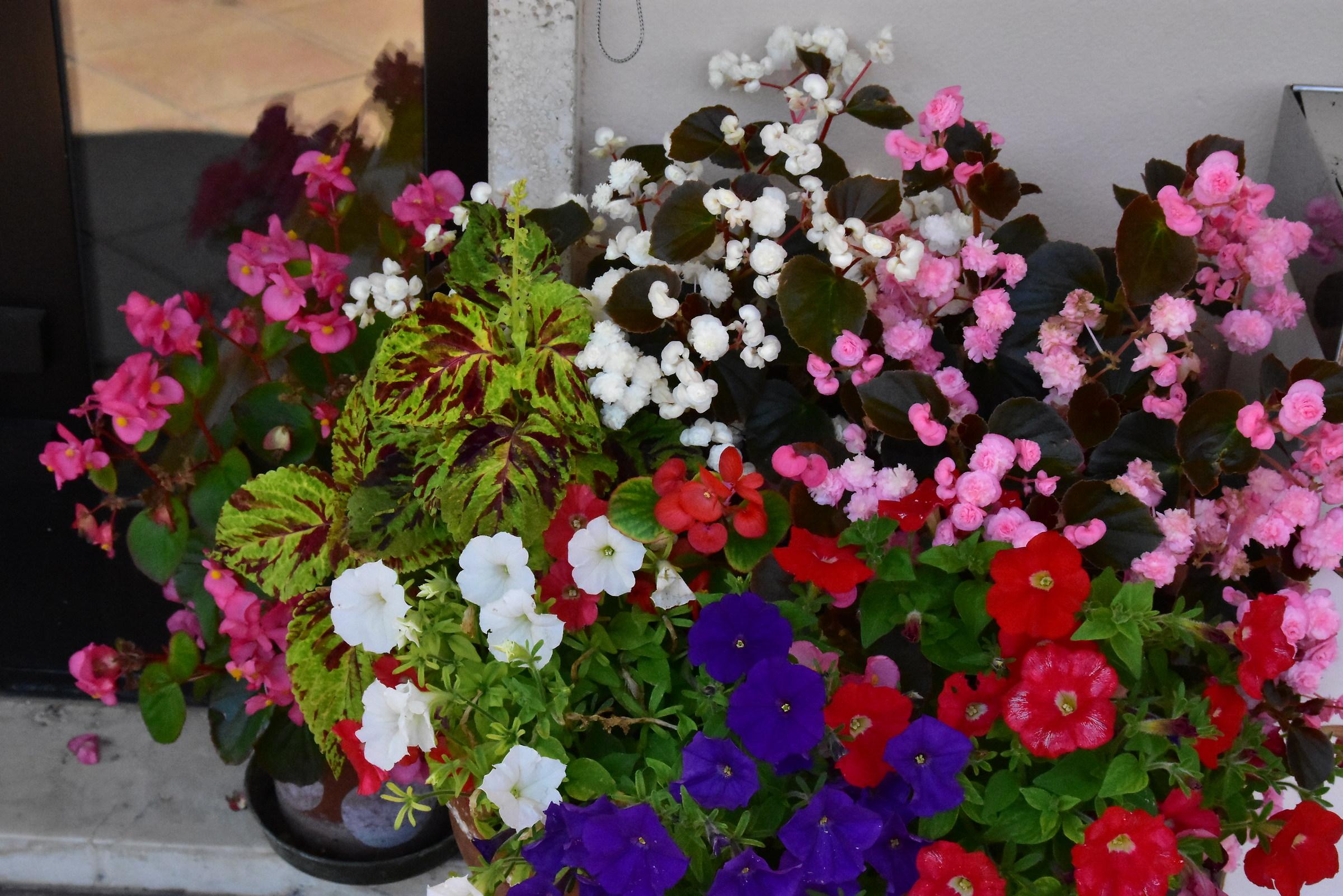 composizione di fiori  JuzaPhoto
