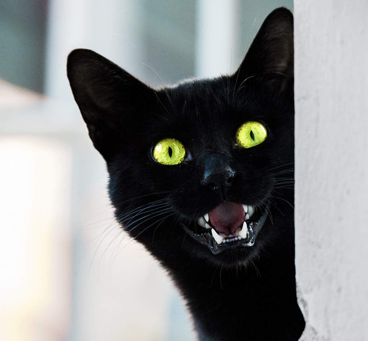 Angry cat!...