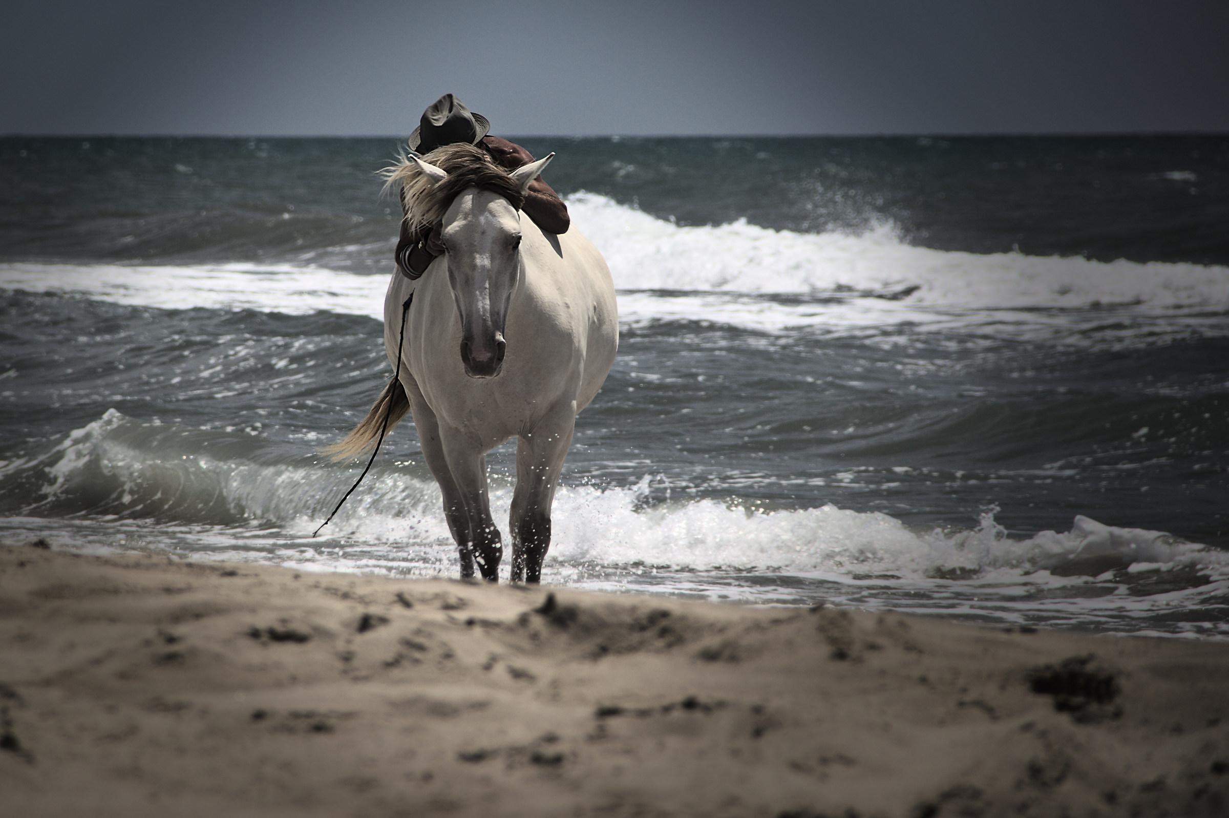 high Horse...