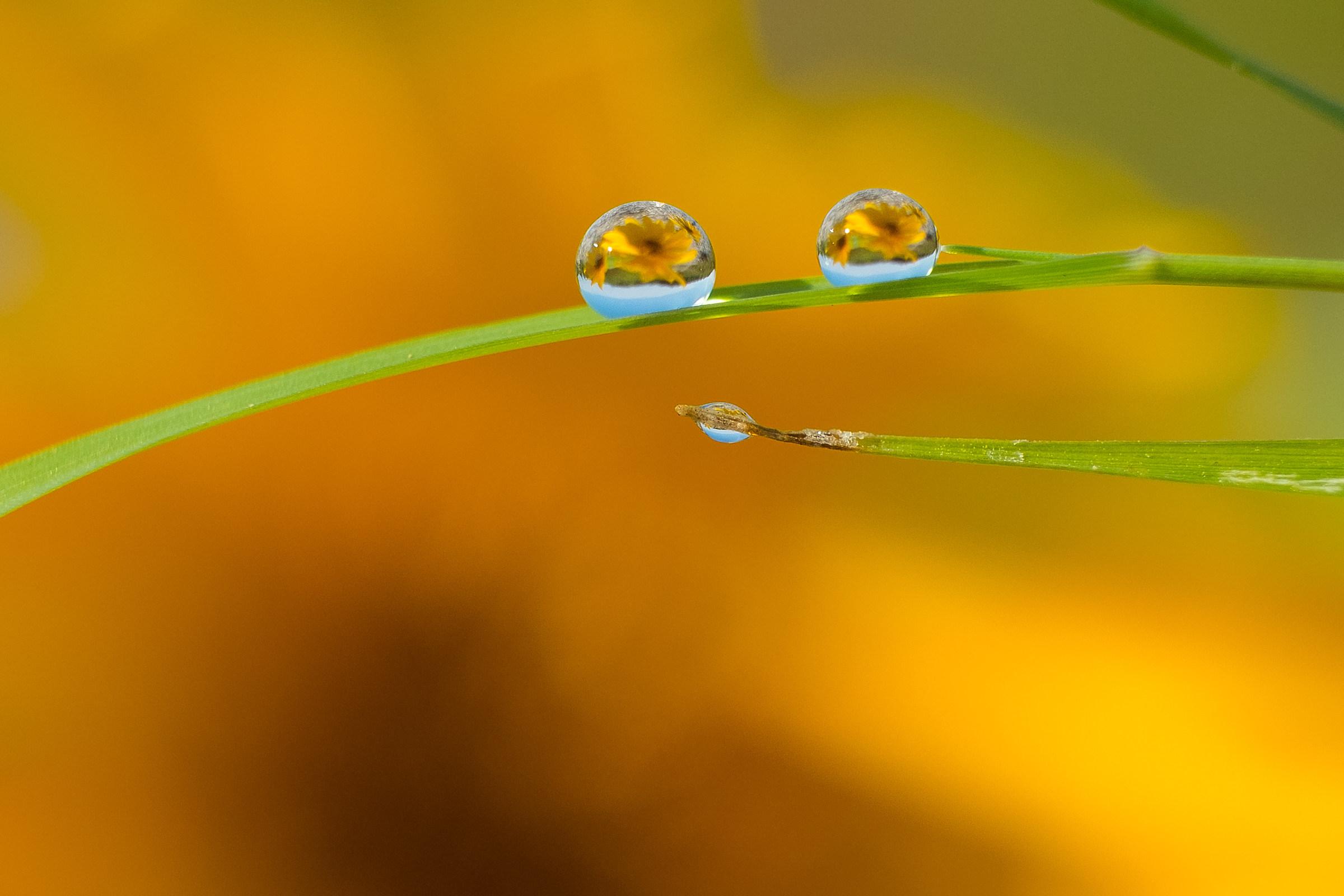Drops of nature...