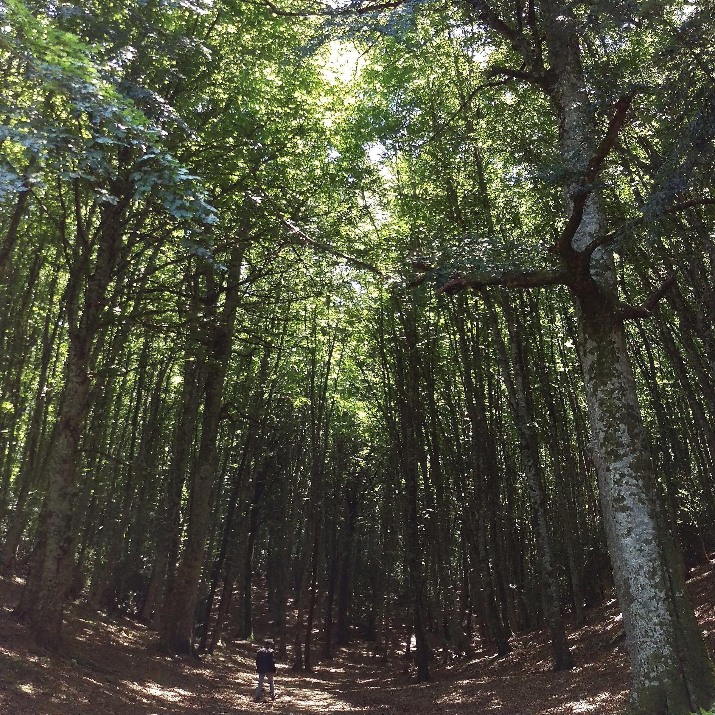 foresta umbra...