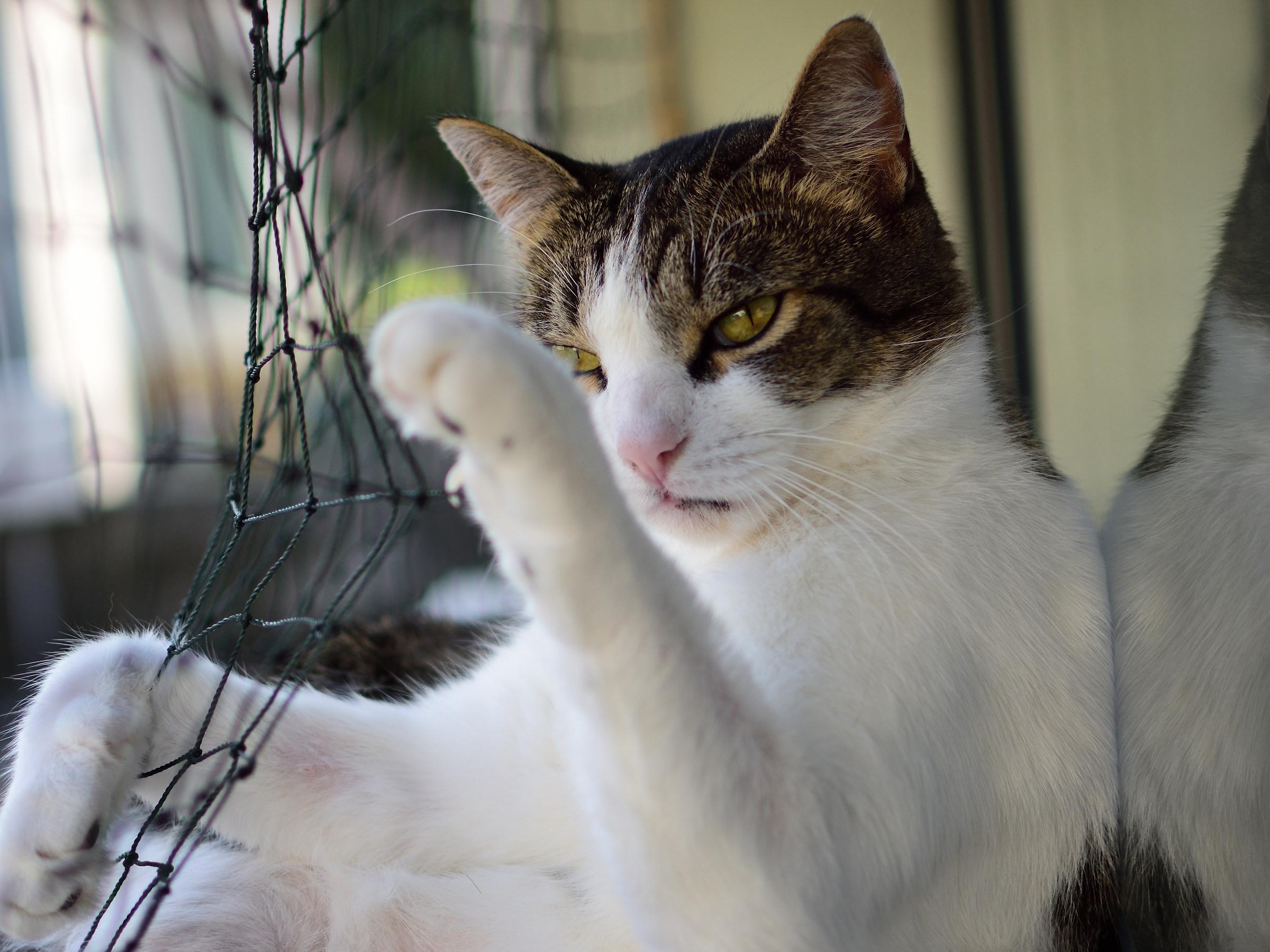 Kung Fu Cat...