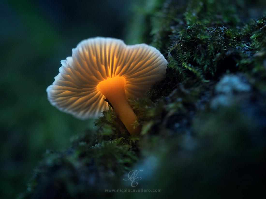 Magic mushrooms...