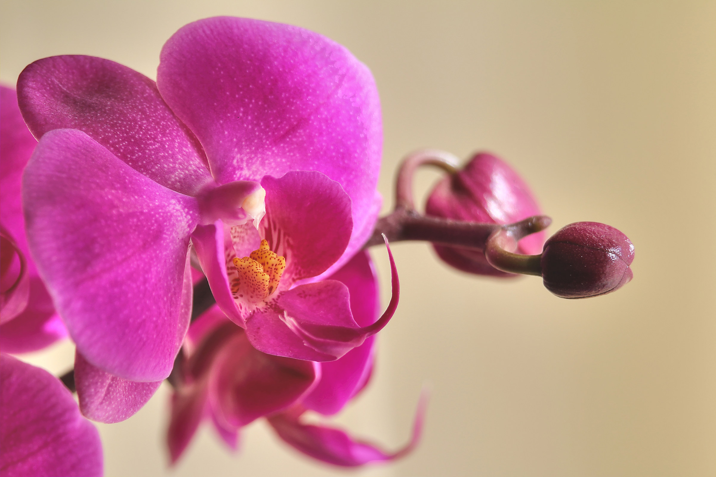Orchidaceae...