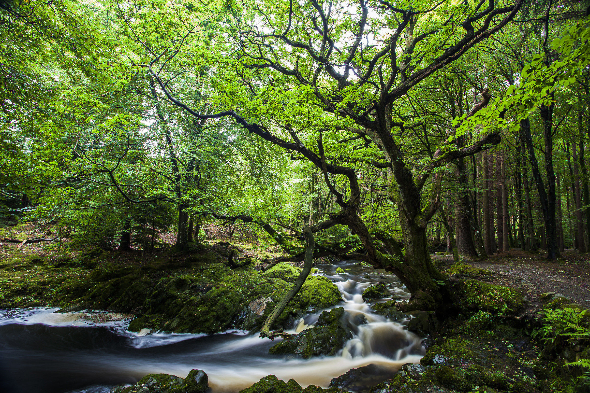 tollymore forest...