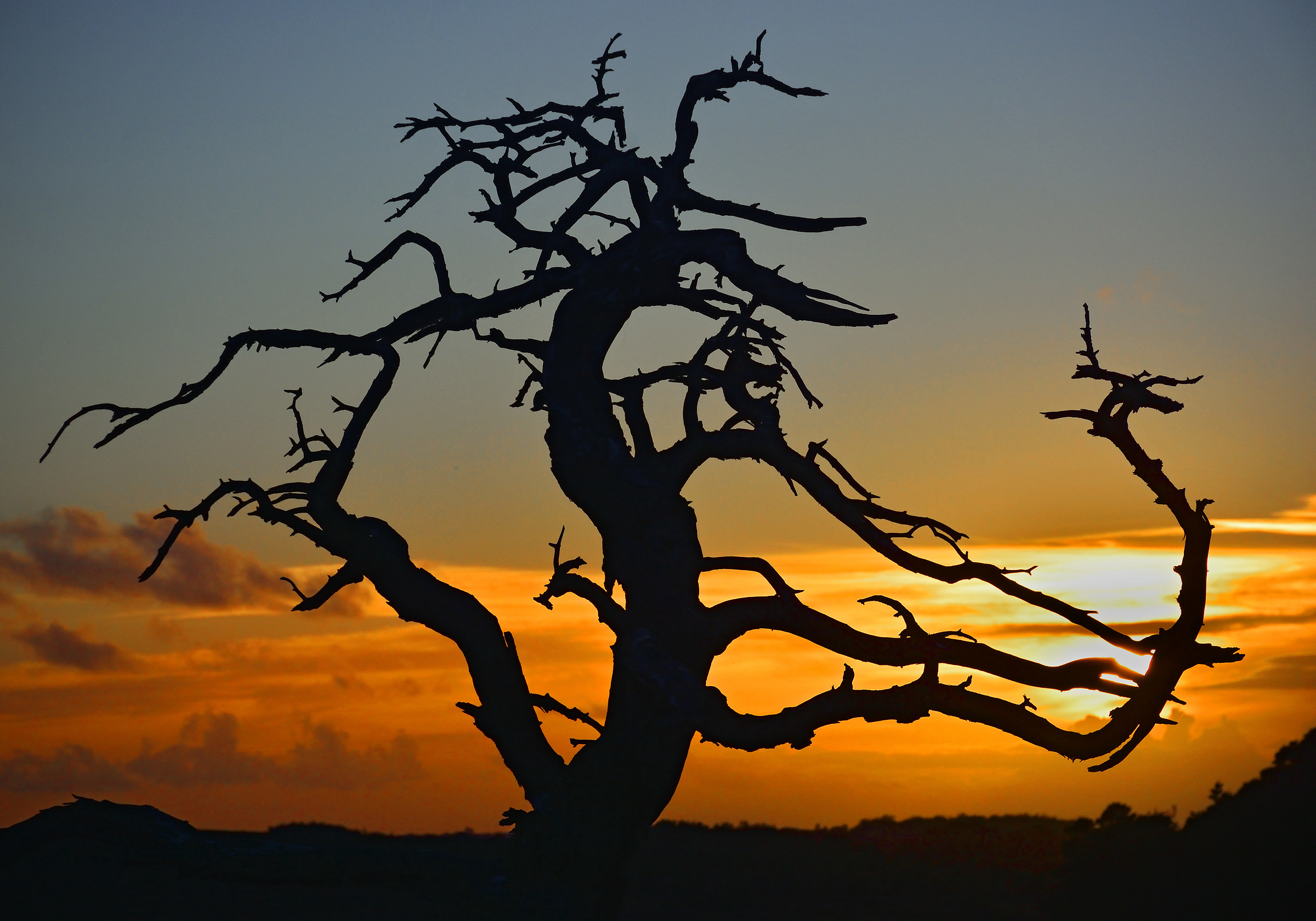 The Amazing Old Dead Tree (al tramonto)...
