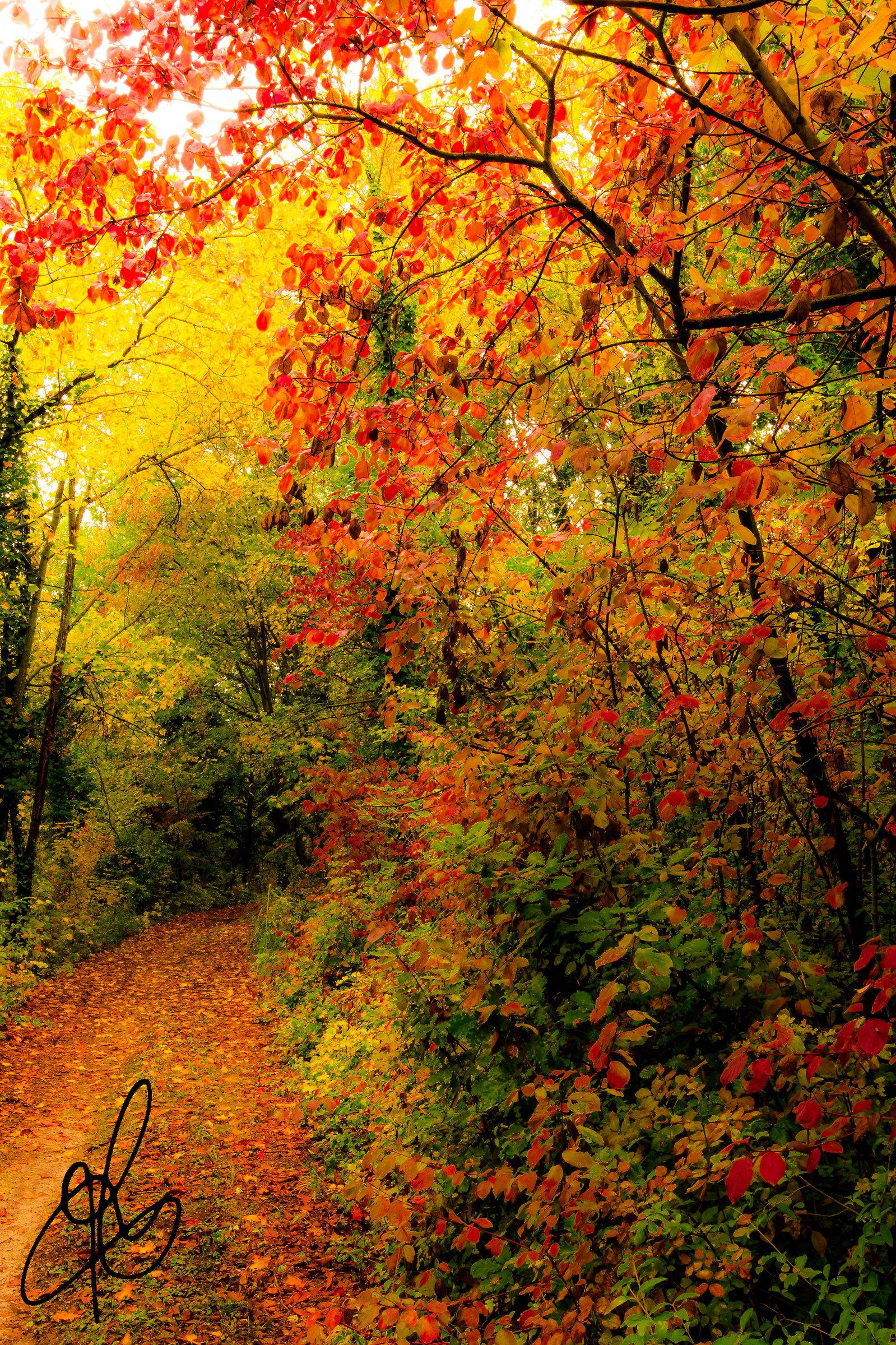 Autumn Trails...