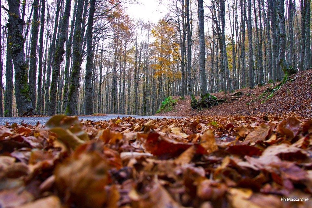Welcome autumn...