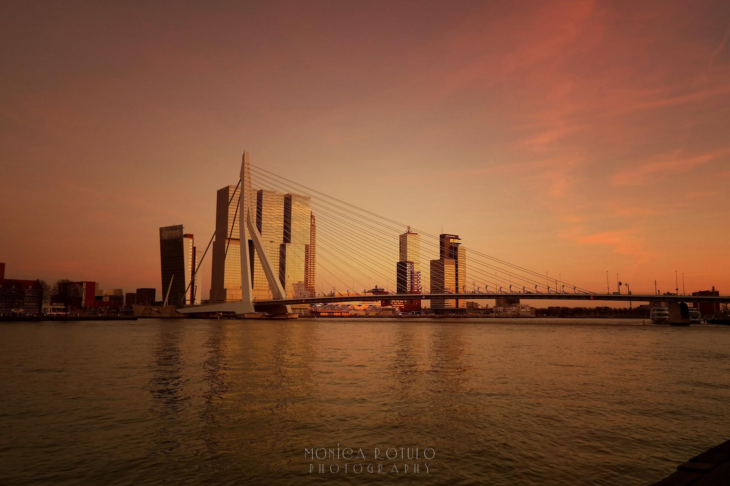Golden Rotterdam...