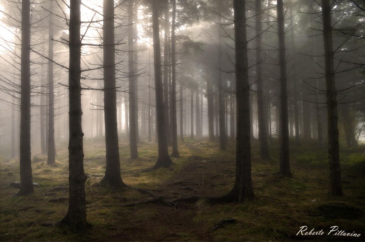 The magic wood...