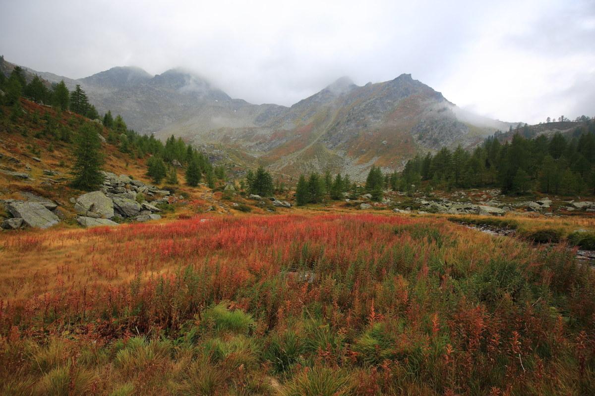 red autumn...