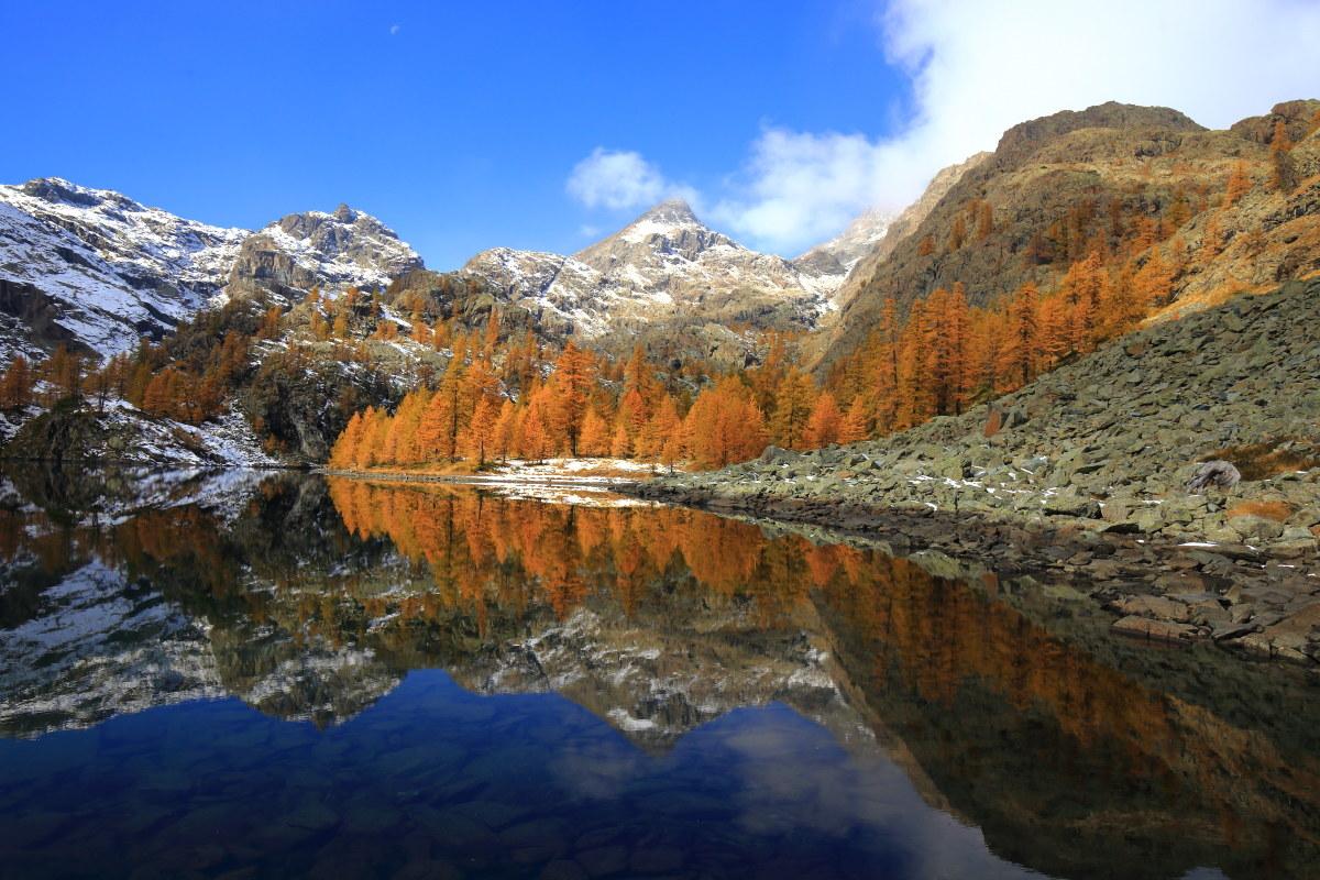 Autumn Lake Horned...