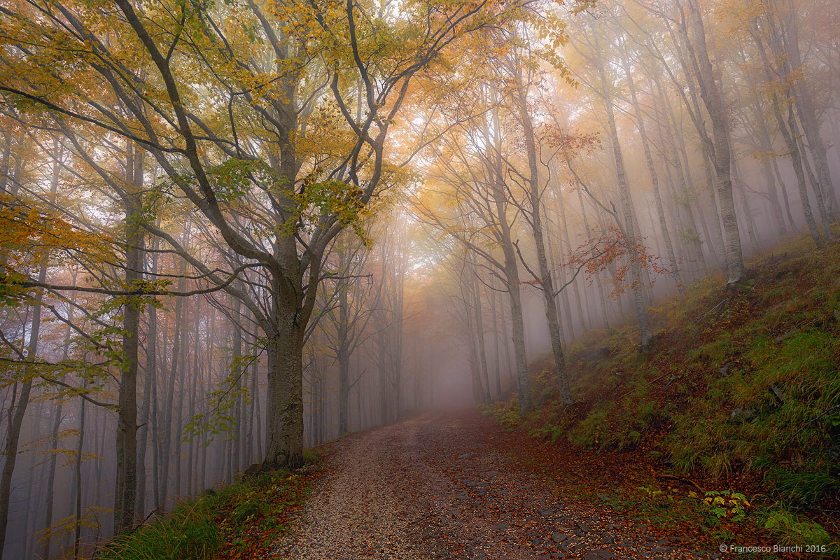 Autumn fog...
