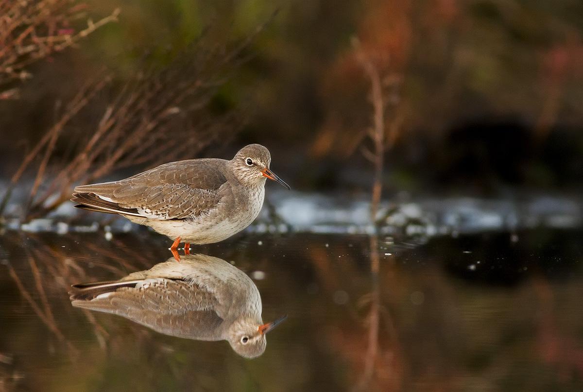 Pettegola allo specchio juzaphoto - L immagine allo specchio streaming ...