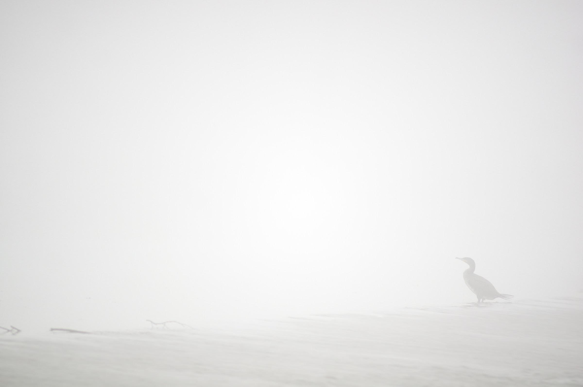 misty morning...