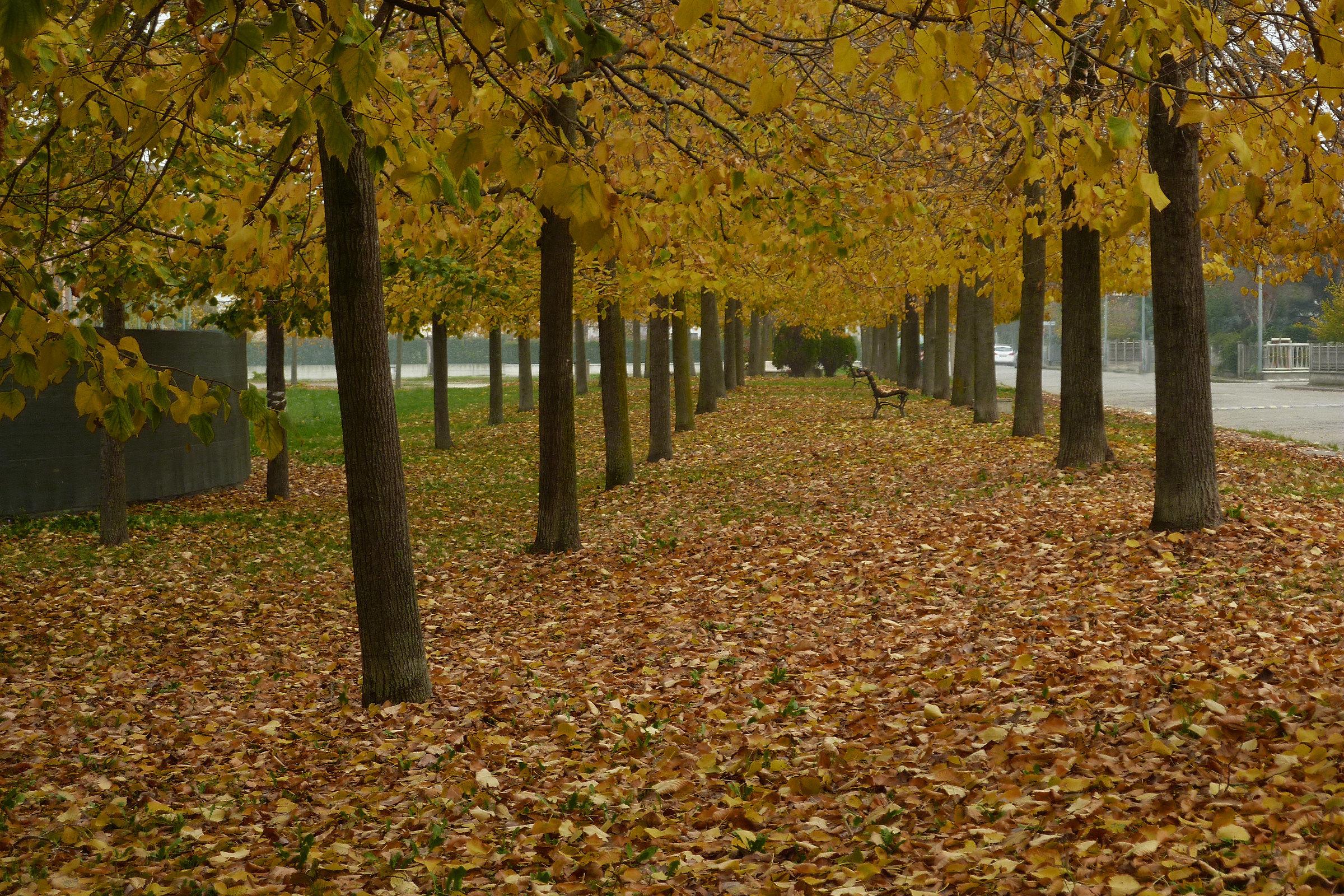 Colors in autumn...