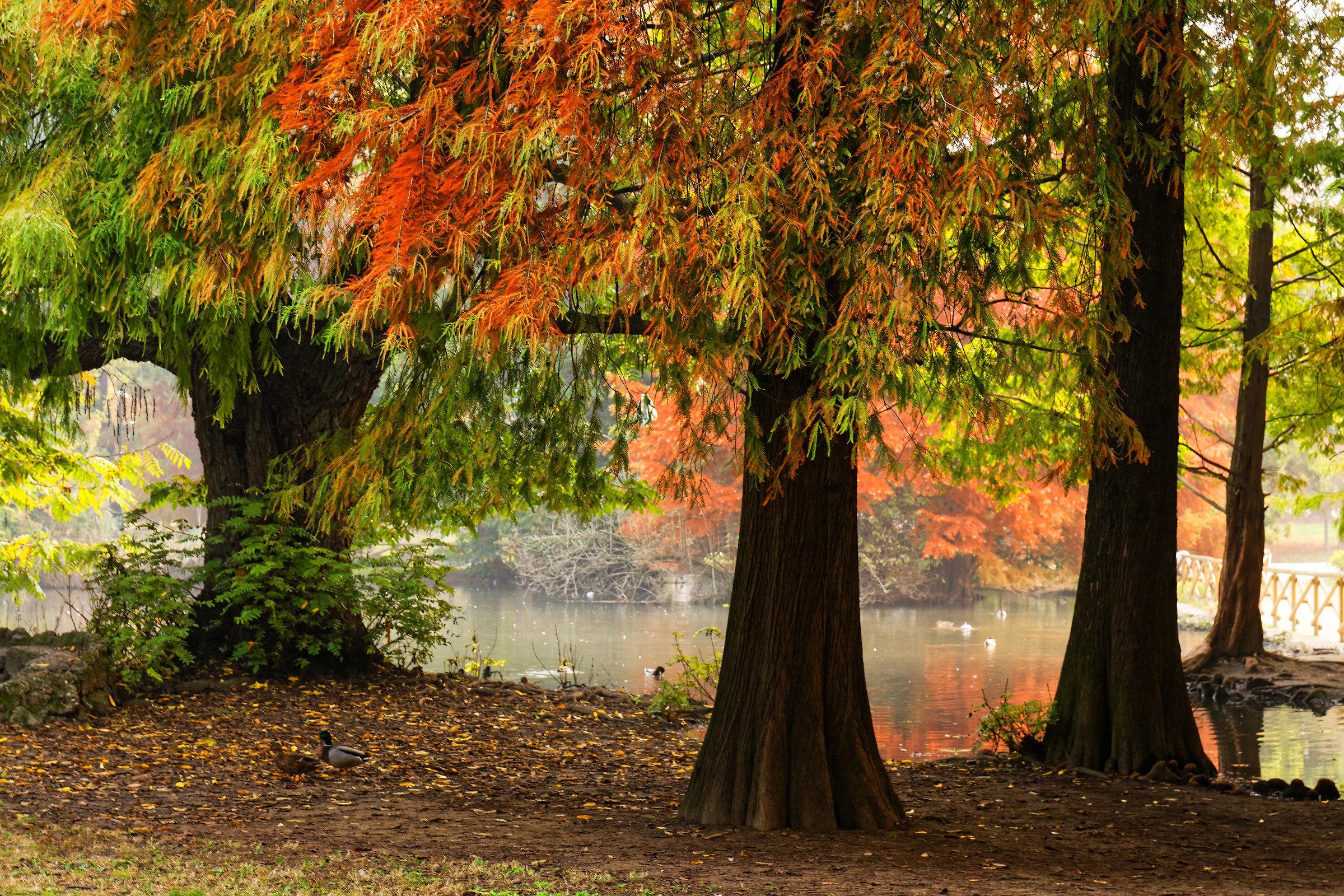 Autumn in Milan...