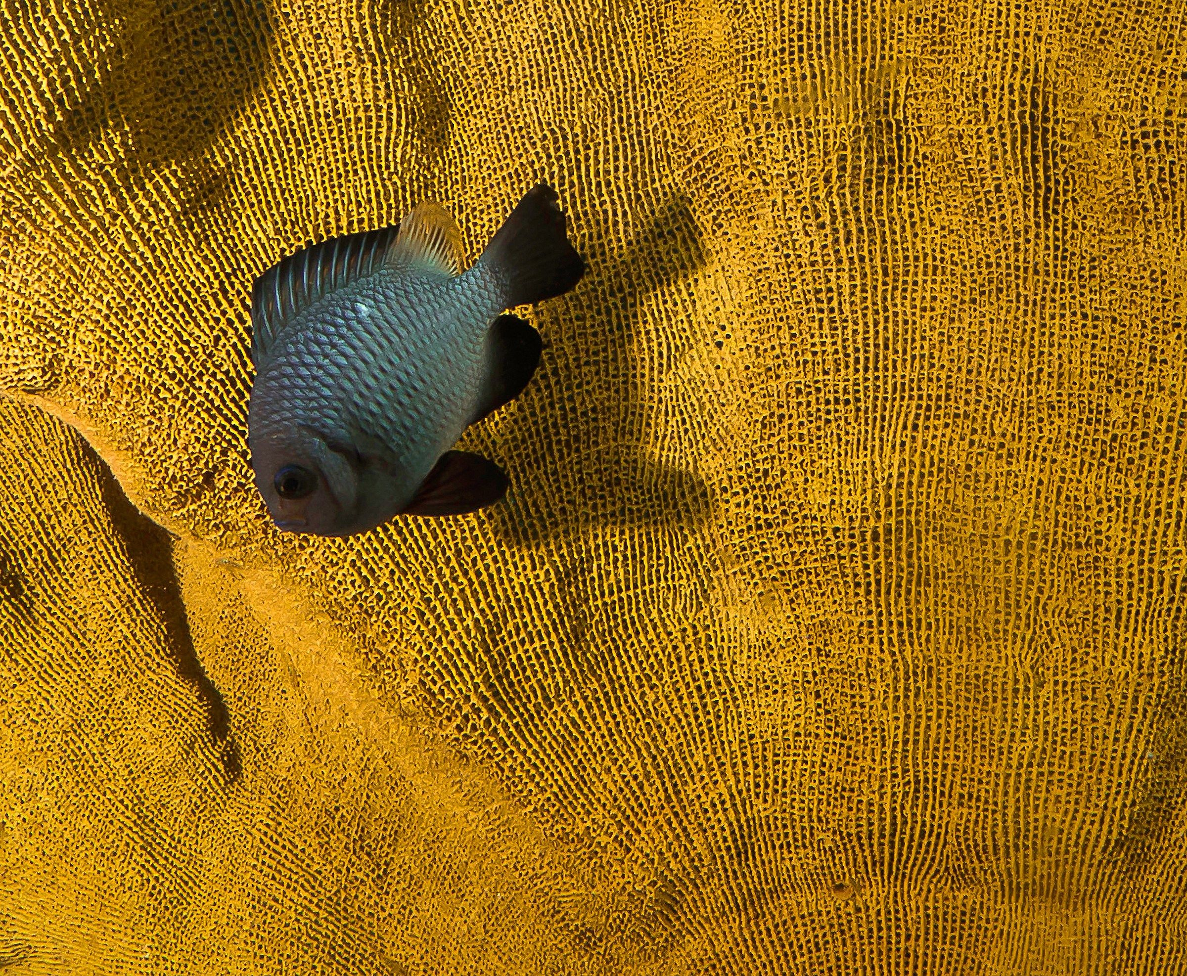 Funky Fish...