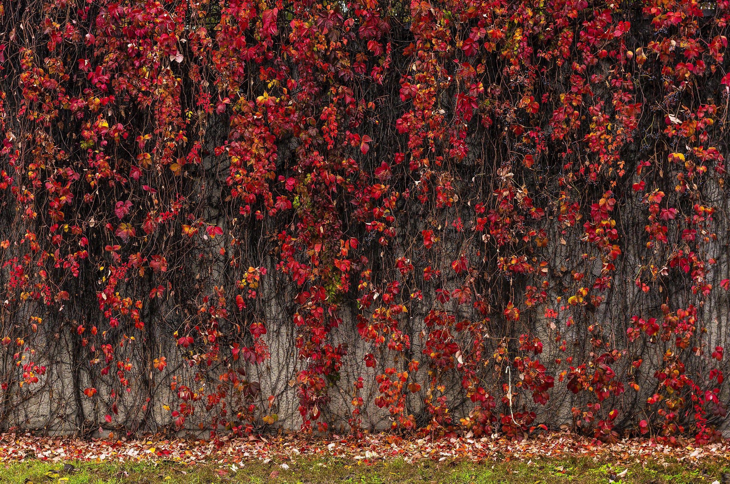 Wall autumn ......