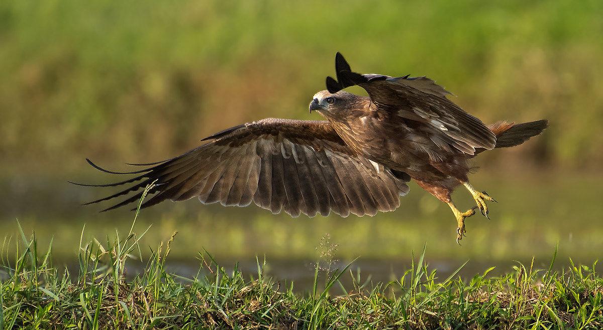 The Wildlife Photography Shots