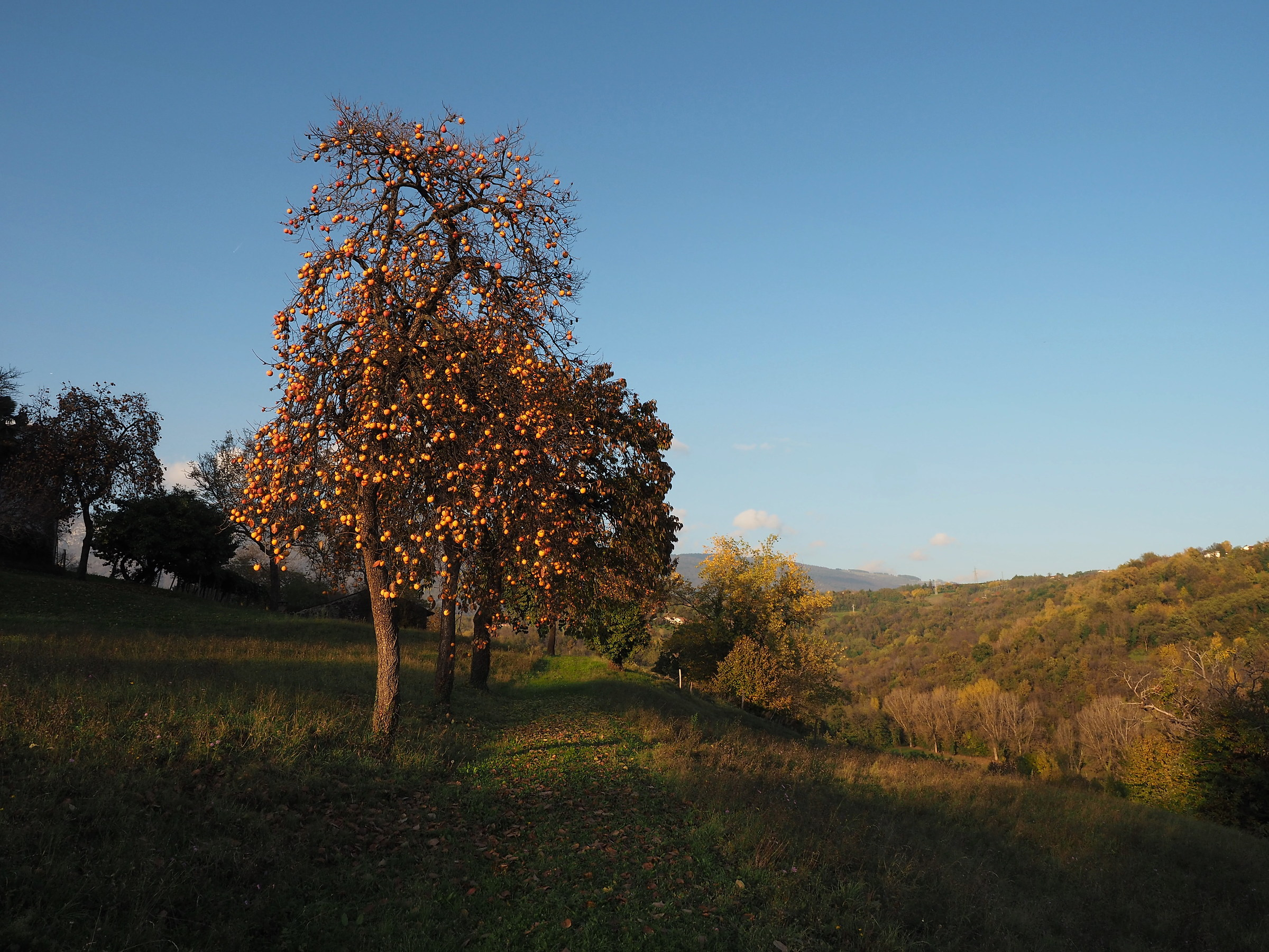 Autumn in the hills...