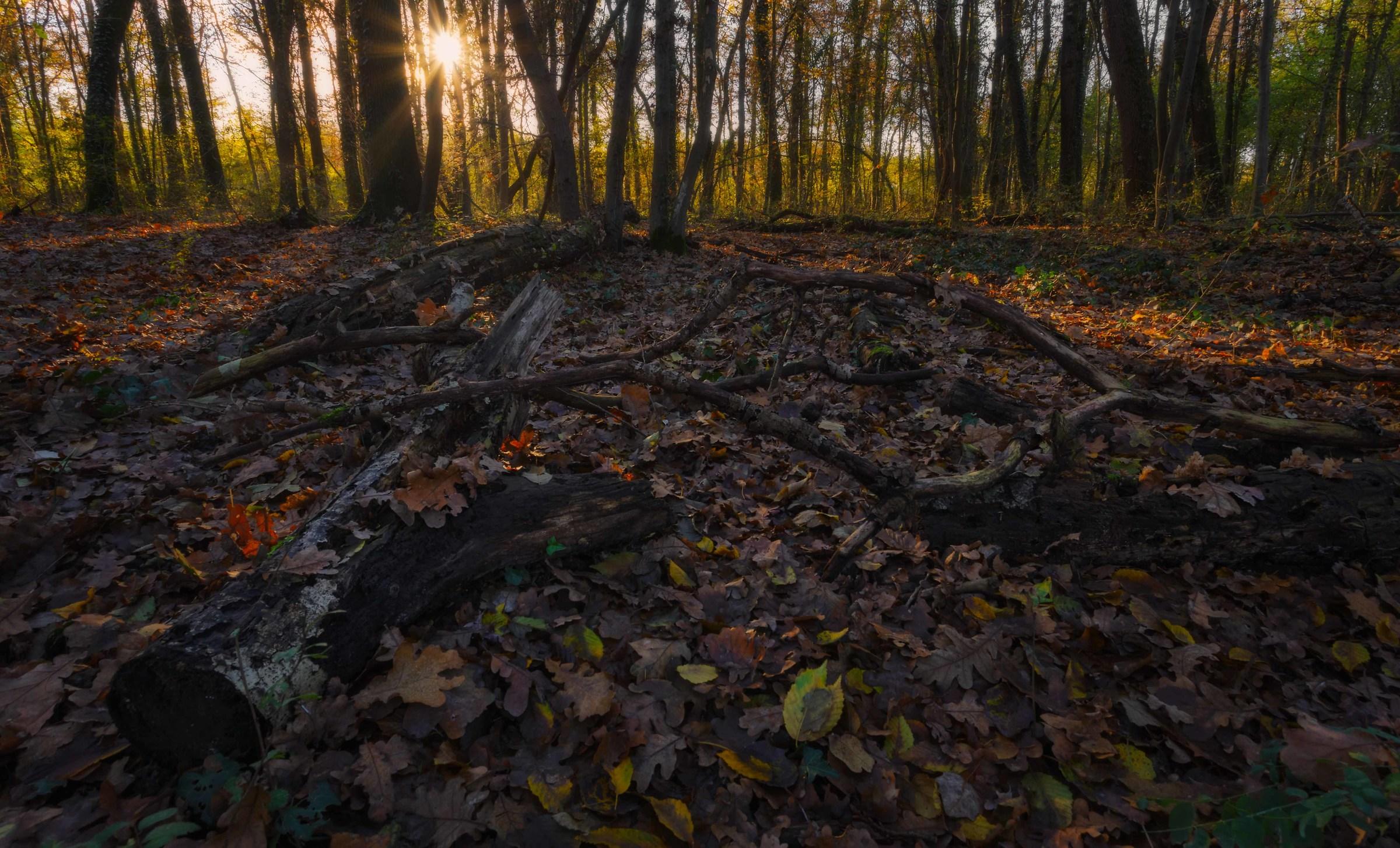 la stella del bosco...
