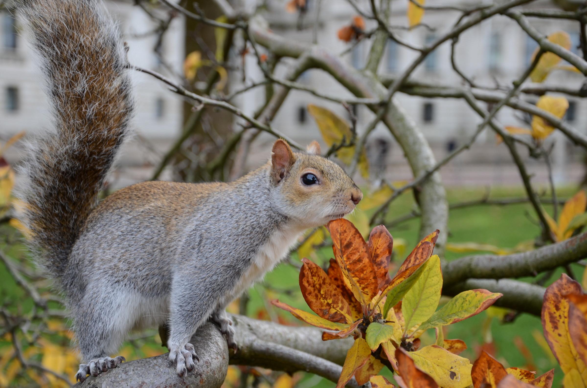 Squirrel in nature...