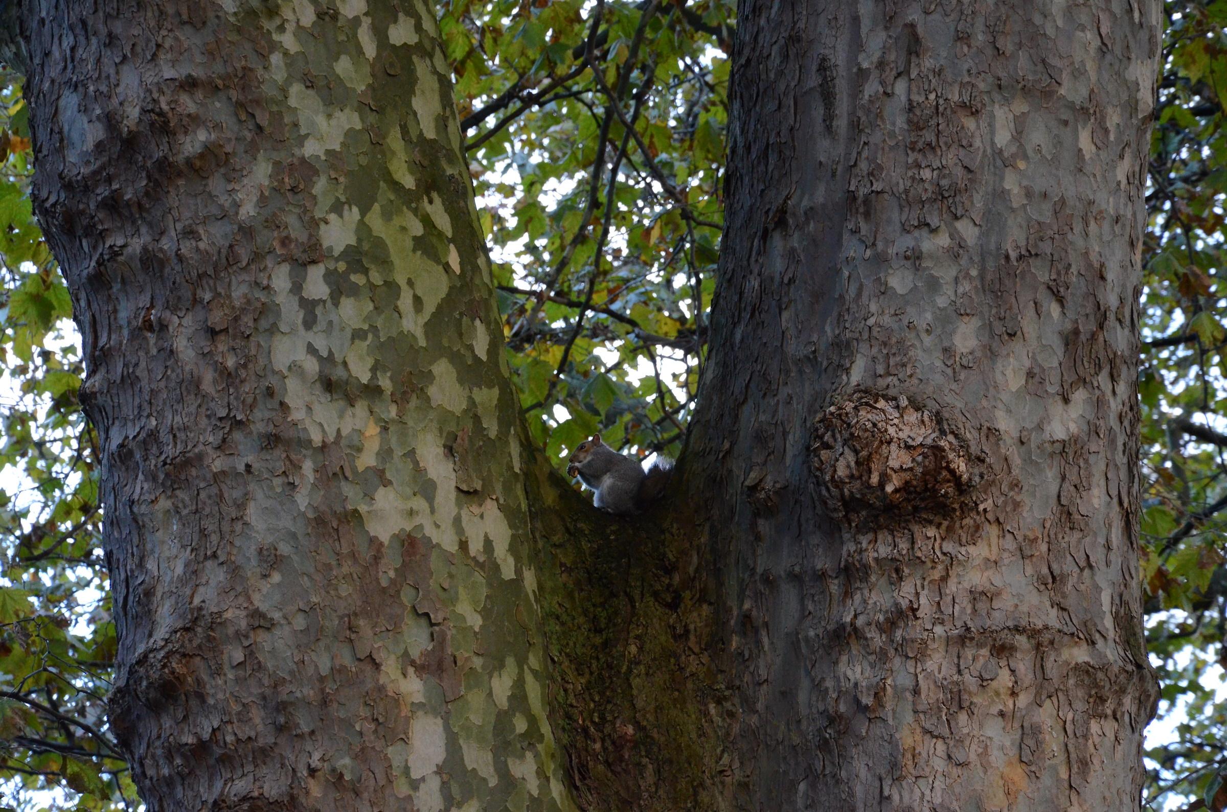 secret squirrel...