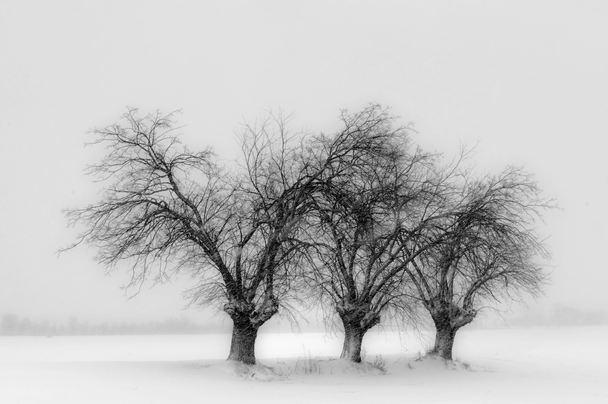The quiet road of snow...