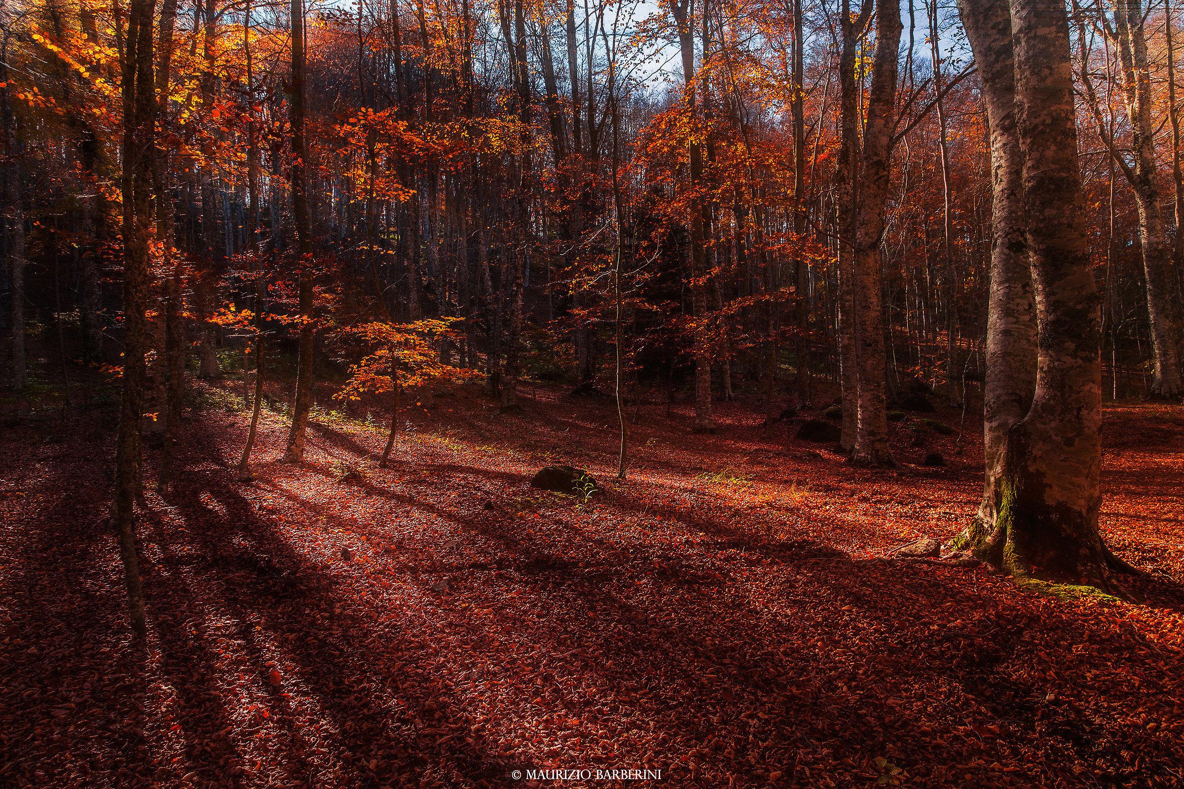 La foresta...
