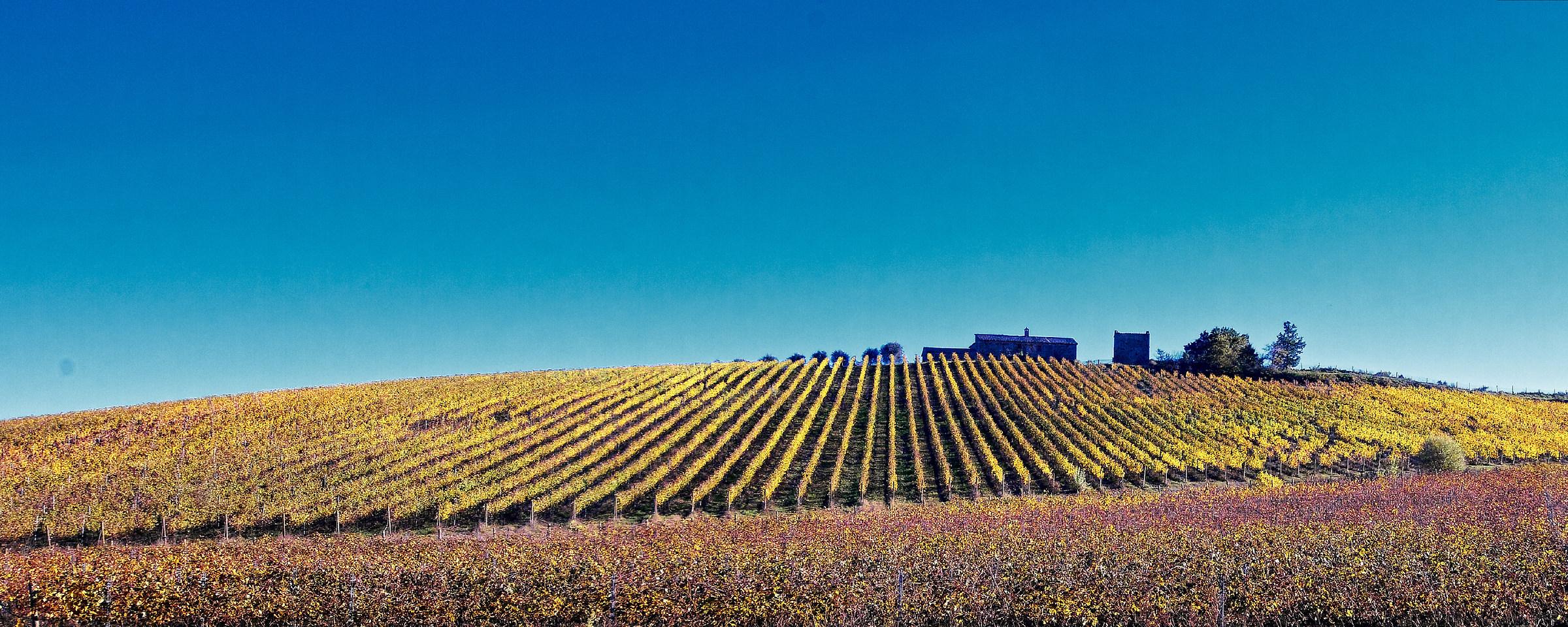 vineyard...